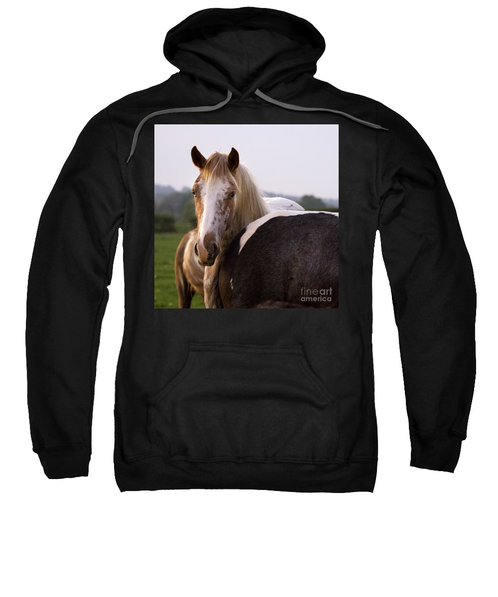 Horse Sweatshirt featuring the photograph Horses by Angel Ciesniarska