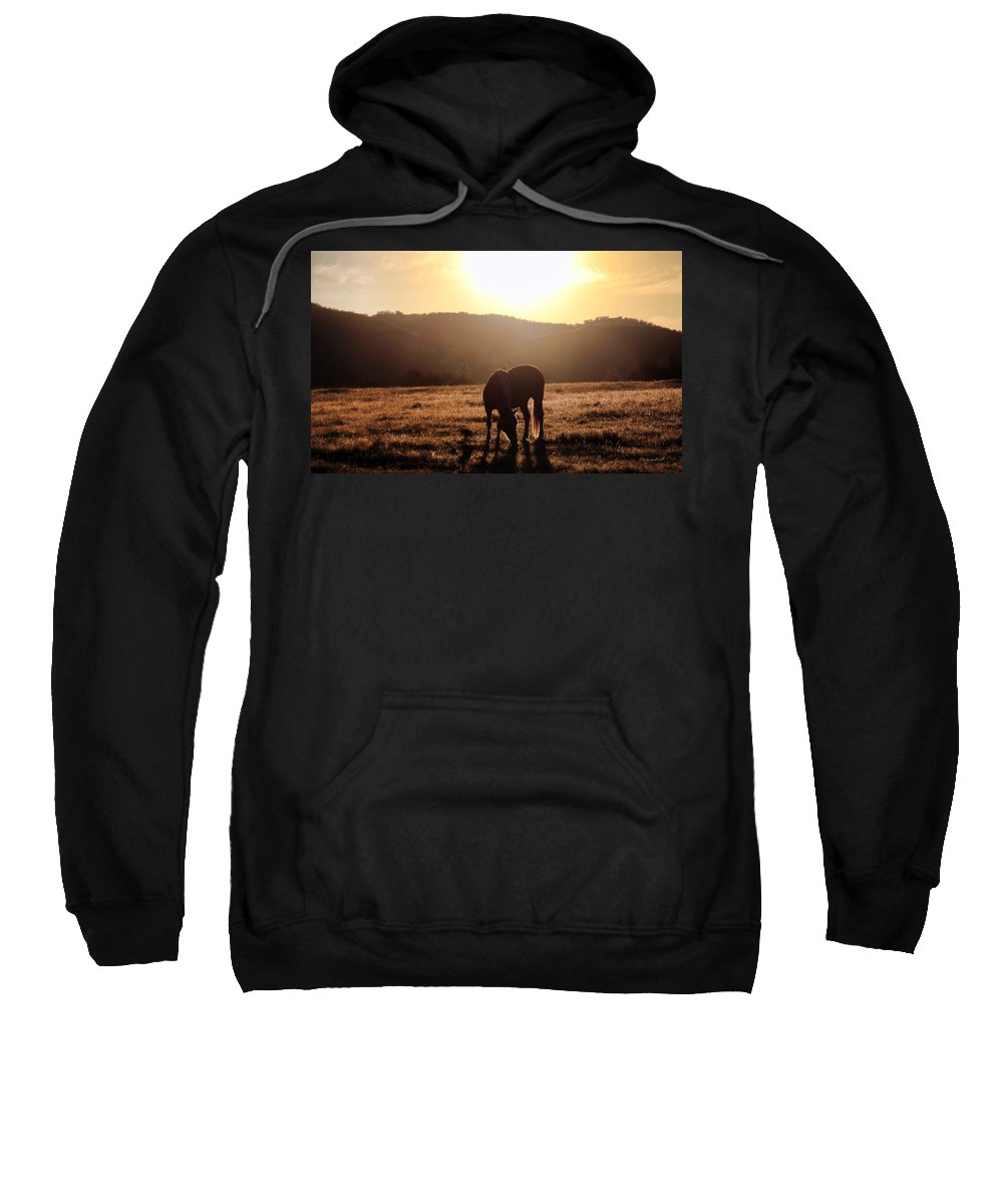 Horse Sweatshirt featuring the photograph Morning by Stephanie Laird