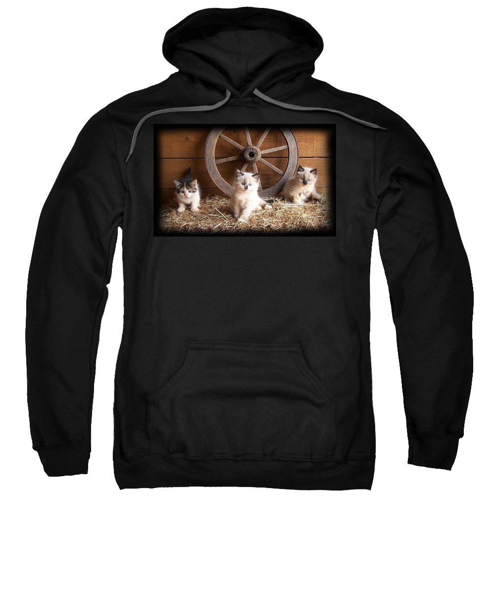 Kittens Sweatshirt featuring the photograph 3 Little Kittens With The Wagon Wheel. by Sue Martin
