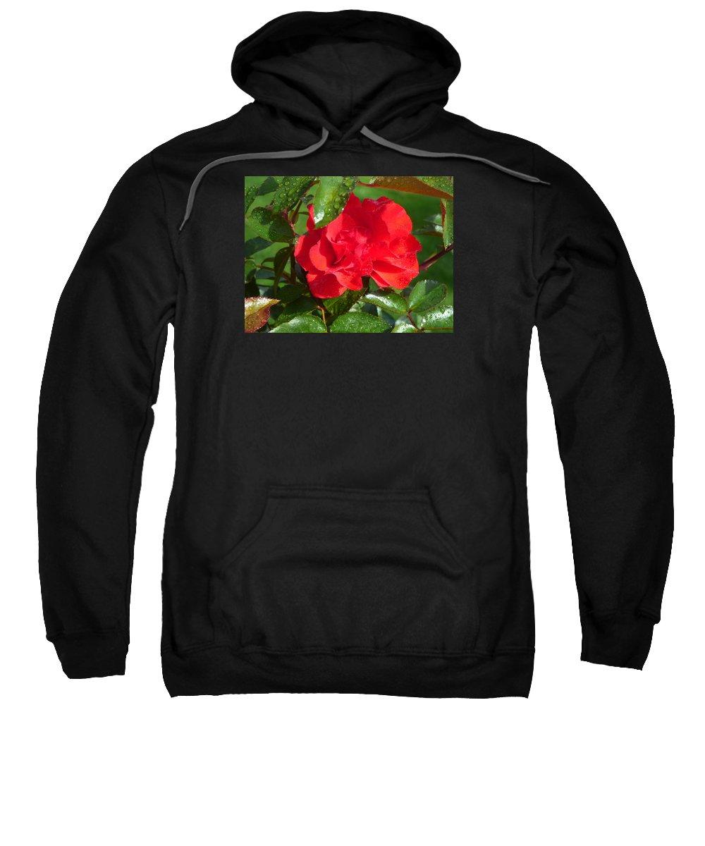 Flowers Garden Idaho Photography Sweatshirt featuring the photograph La Vie En Rose by Paul Stanner