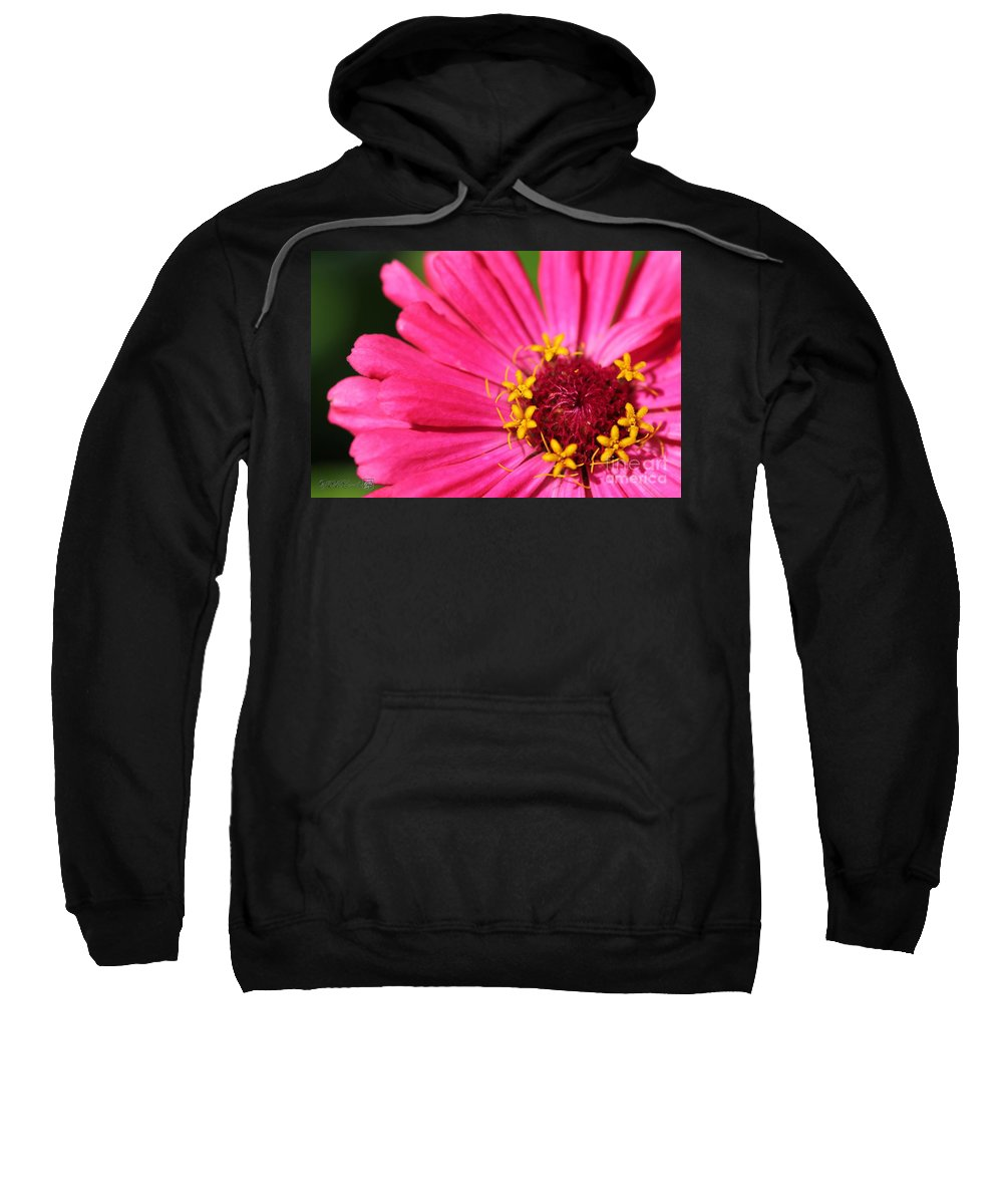 Mccombie Sweatshirt featuring the photograph Fuchsia Pink Zinnia From The Whirlygig Mix by J McCombie
