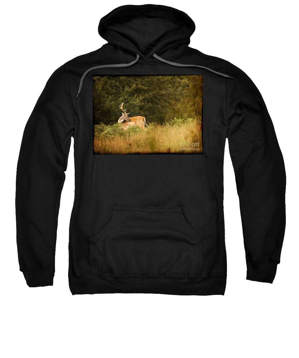 Fallow Deer Sweatshirt featuring the photograph Fallow Deer by Angel Ciesniarska