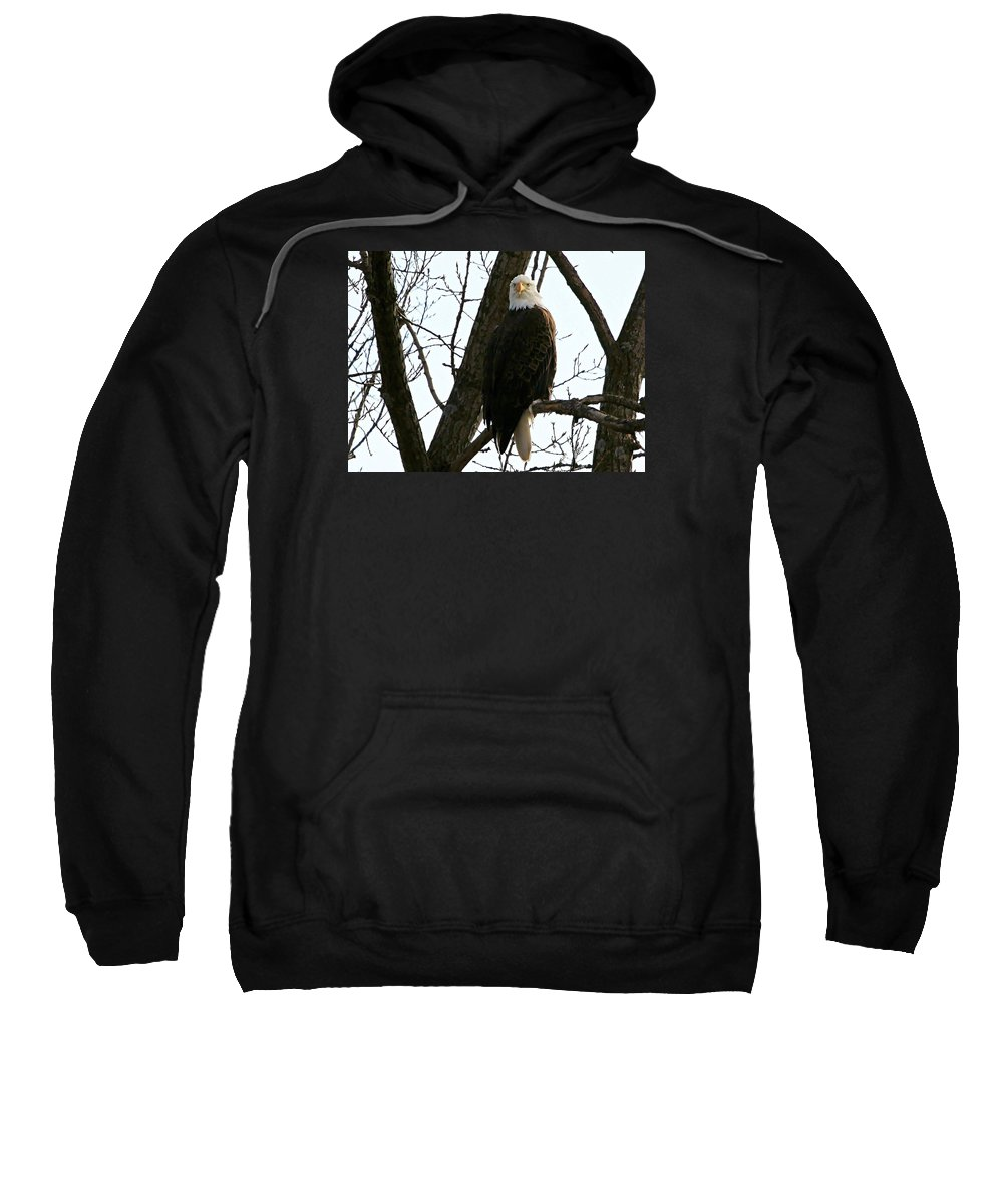 Black And White Photography Sweatshirt featuring the photograph Bald Eagle by John Ohm
