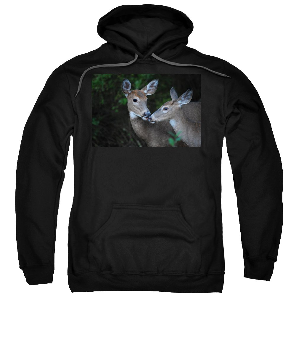 Deer Sweatshirt featuring the photograph A Moms Touch by Lori Tambakis