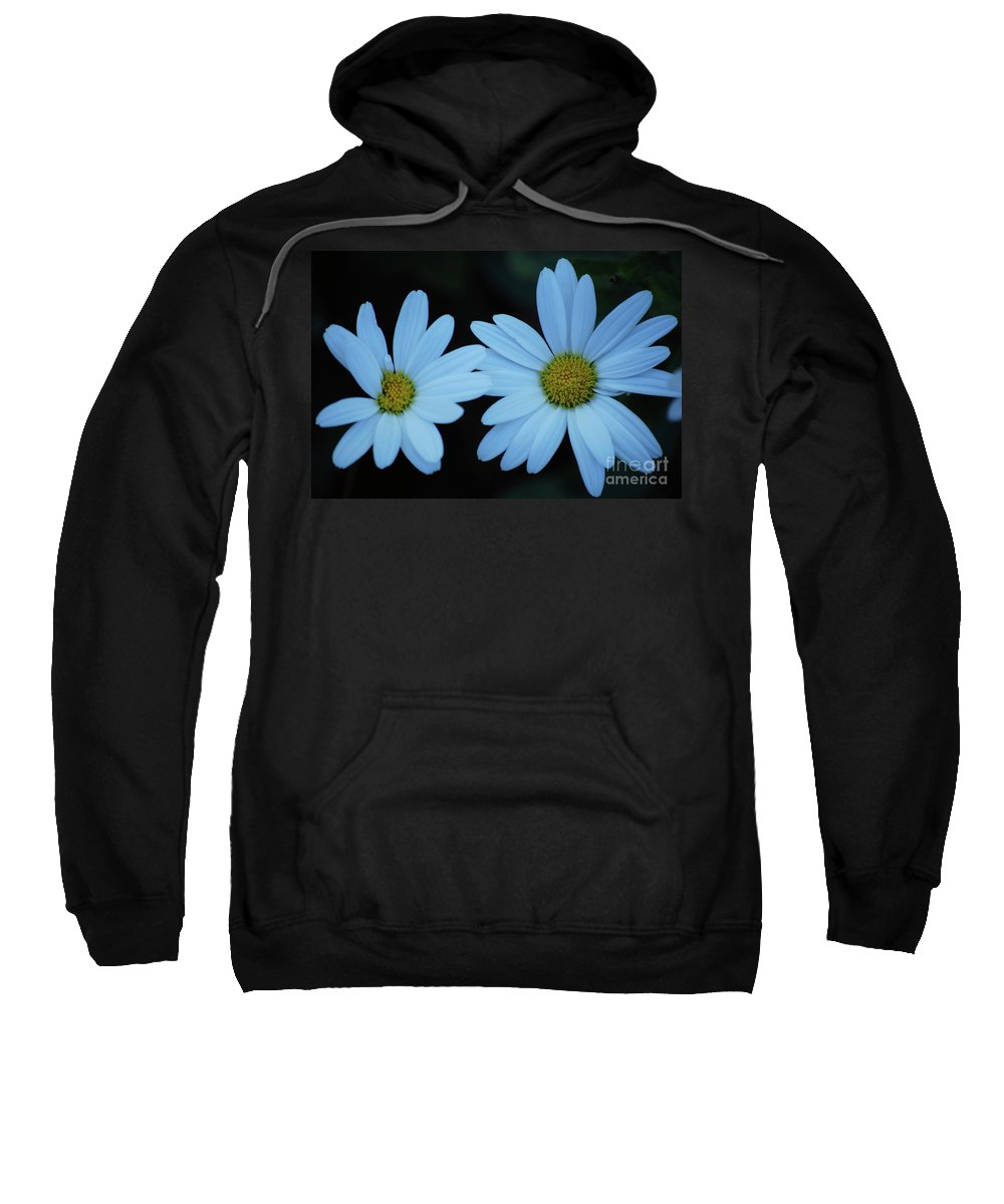 Daisy Sweatshirt featuring the photograph A Pair Of Daisies by Lori Tambakis