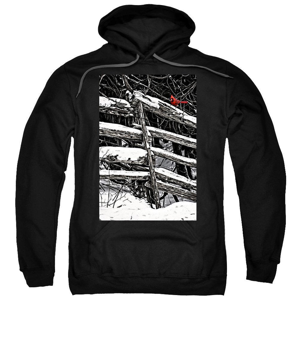 Winter Sweatshirt featuring the photograph A Splash Of Color by Steve Harrington