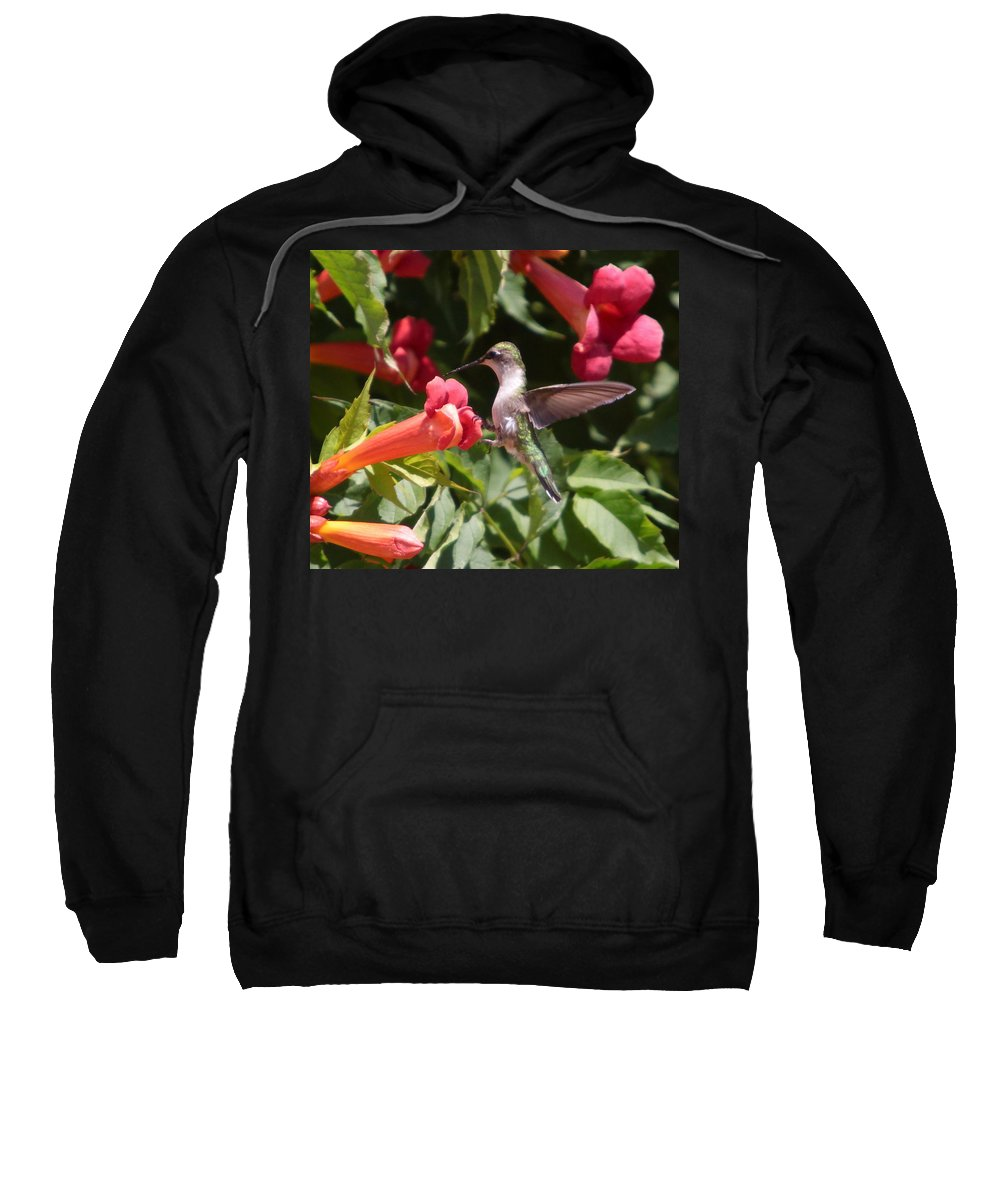 Humming Bird Sweatshirt featuring the photograph A Sweet Tooth-2 by Robert Pearson
