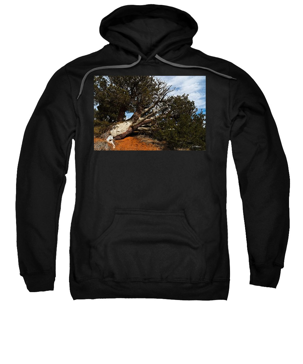 Nature Sweatshirt featuring the photograph Across The Path by Christopher Holmes