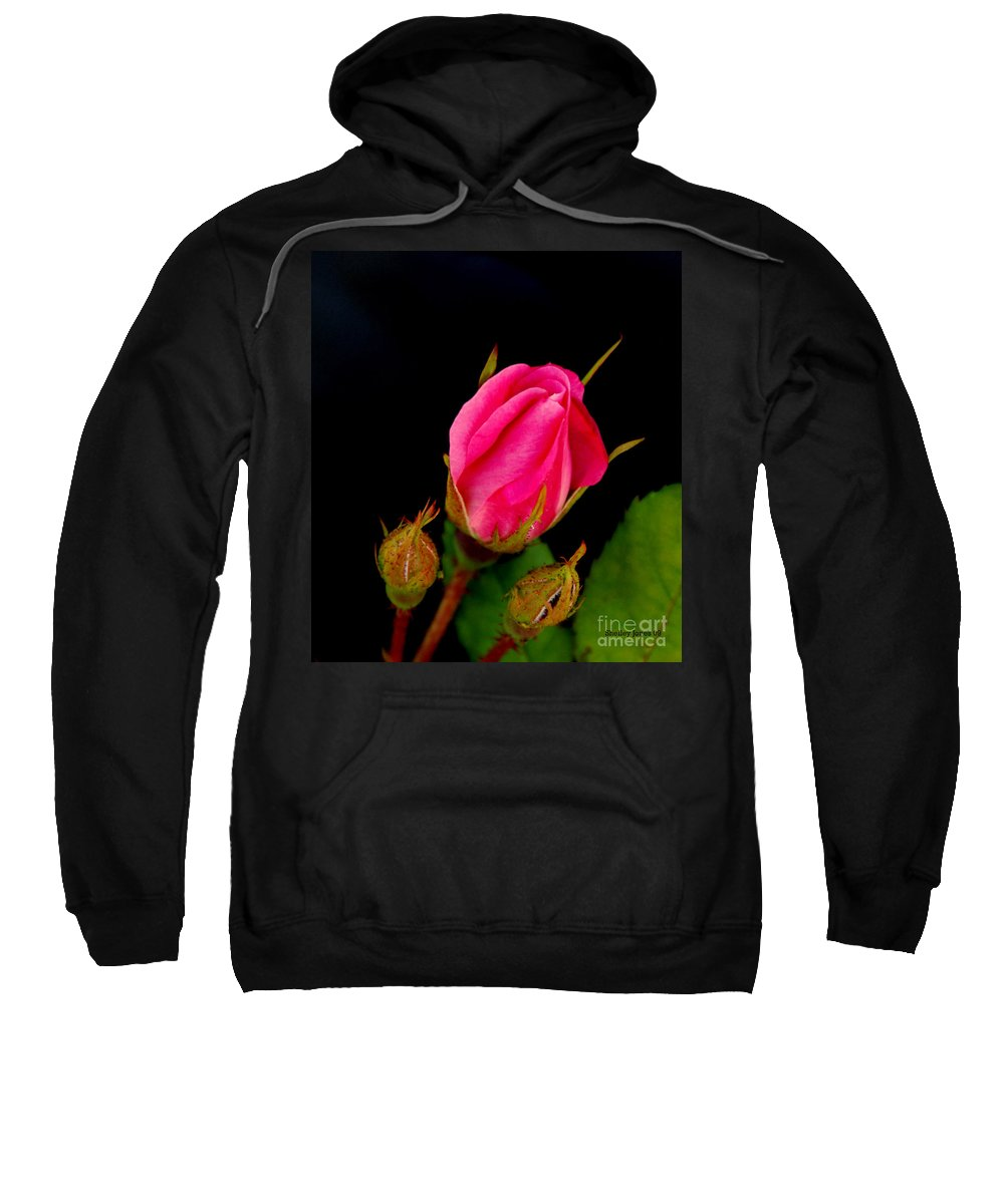Rose Sweatshirt featuring the photograph Admirers by Shelley Jones