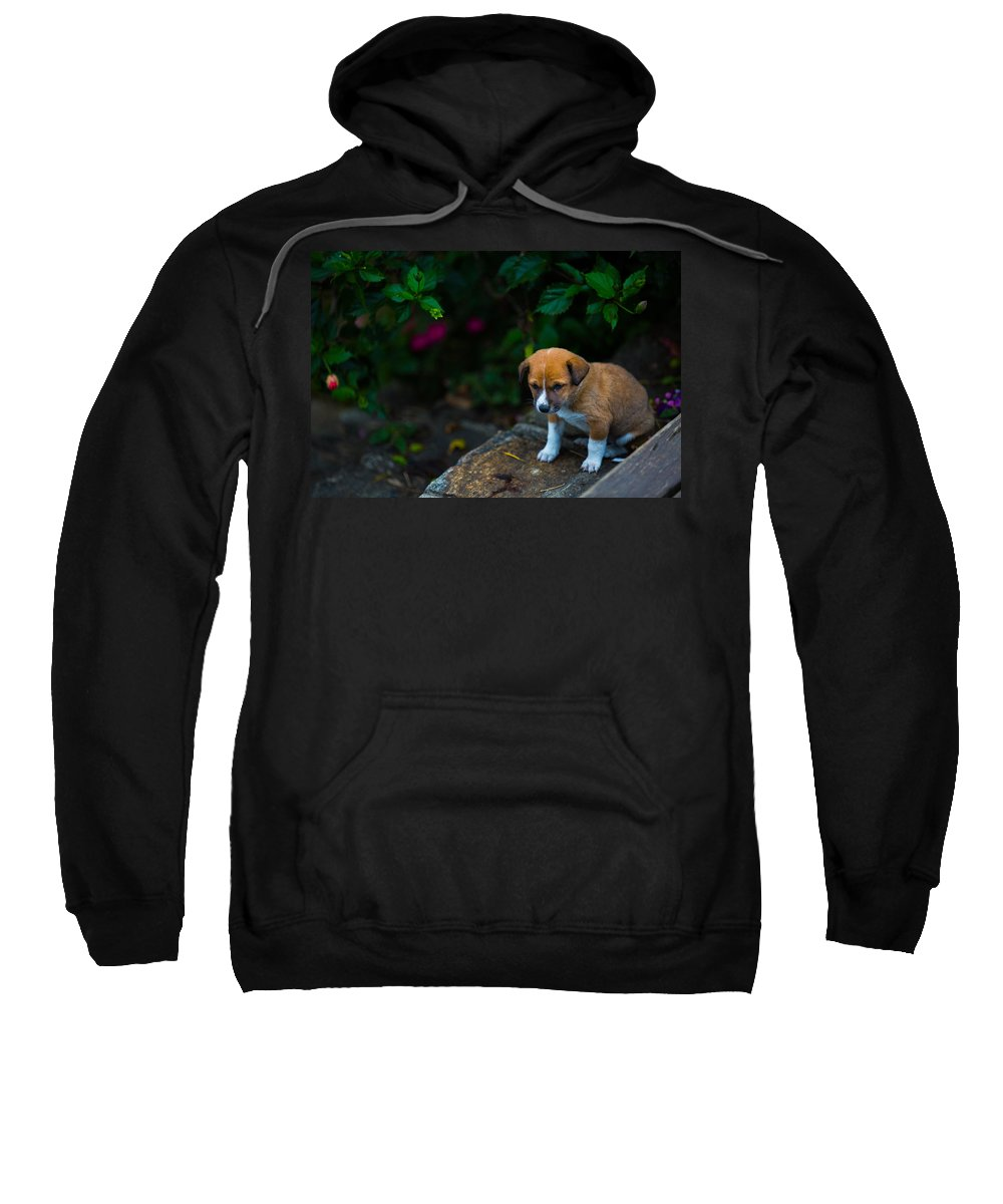 Adorable Sweatshirt featuring the photograph Adorable by Nadir Khan