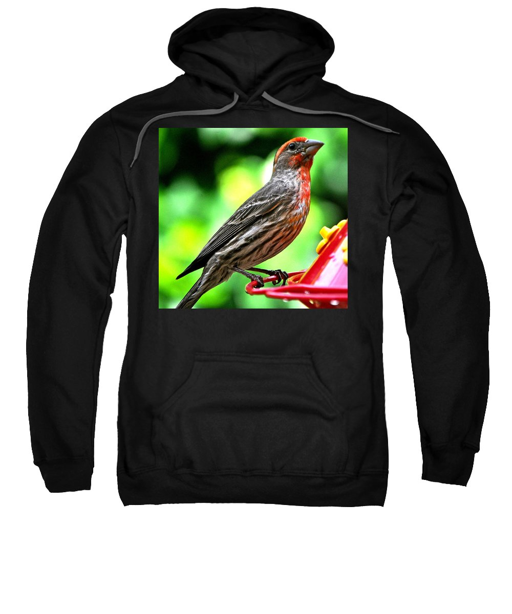 Animal Sweatshirt featuring the photograph Adult Male House Finch by Jay Milo