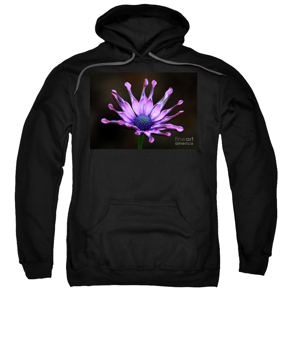 Nature Sweatshirt featuring the photograph African Daisy Portrait by Carol Groenen