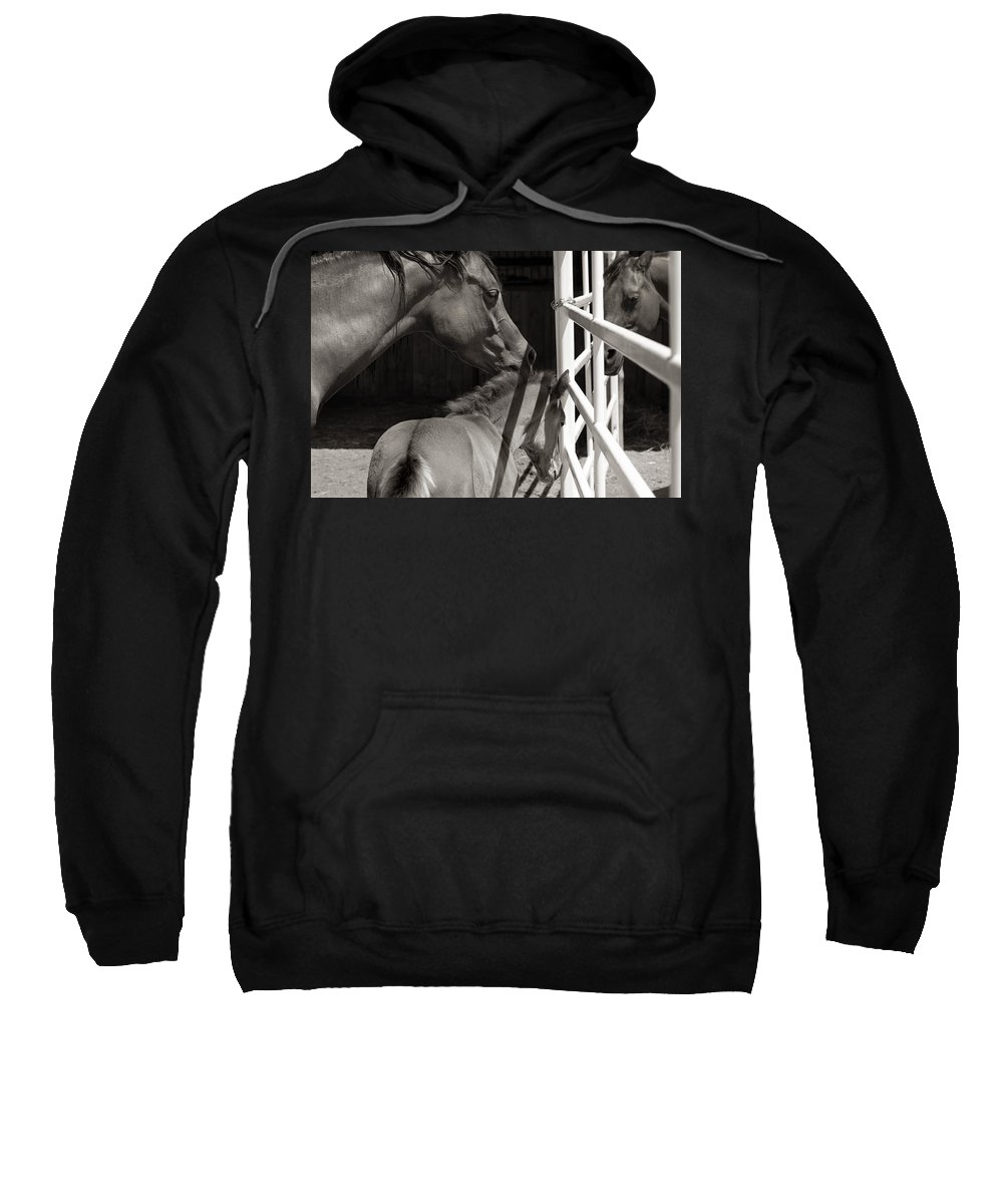 Mother Sweatshirt featuring the photograph Afternoon Visit by Marilyn Hunt