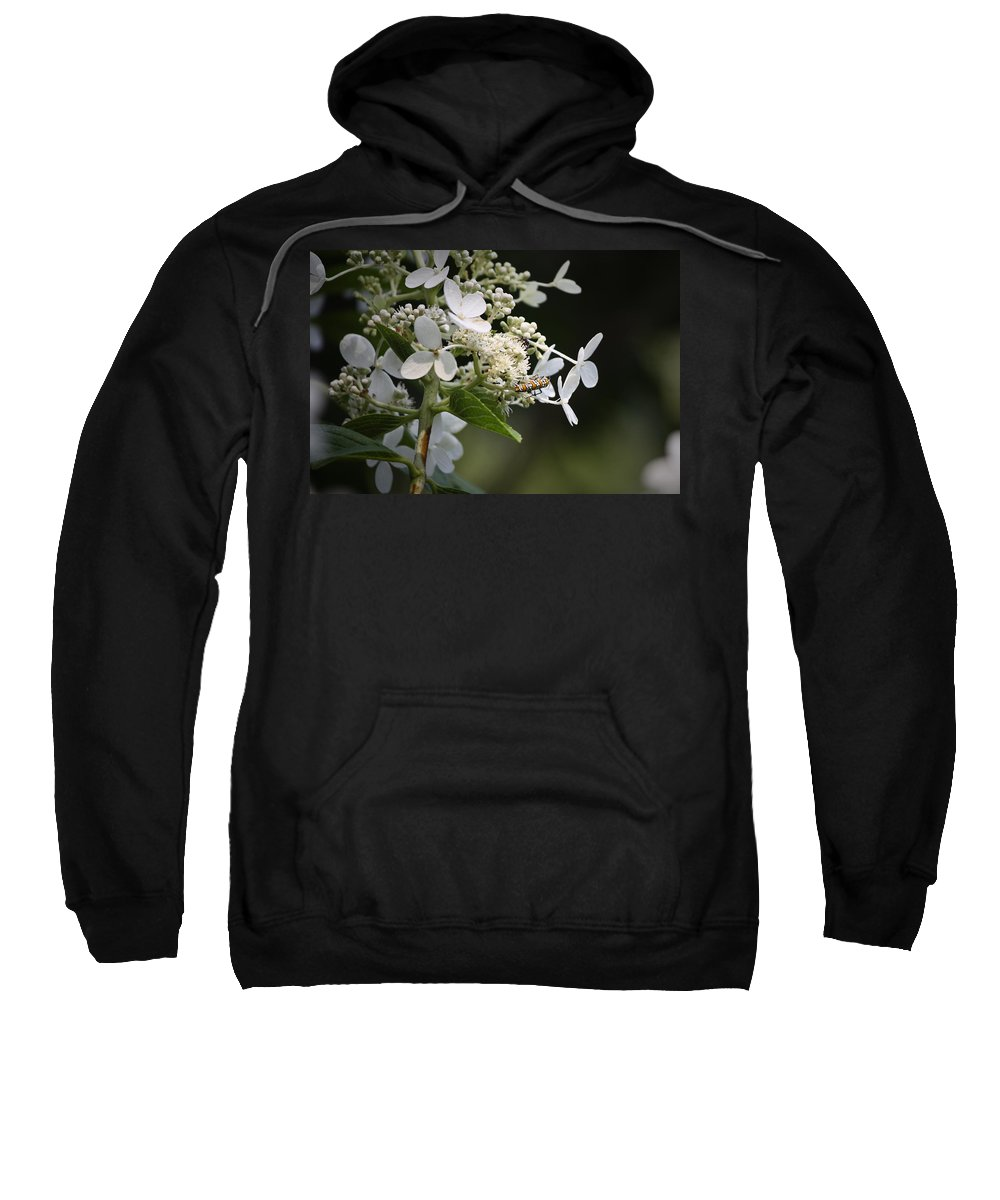 Ailanthus Sweatshirt featuring the photograph Ailanthus Webworm Moth 1 by Teresa Mucha