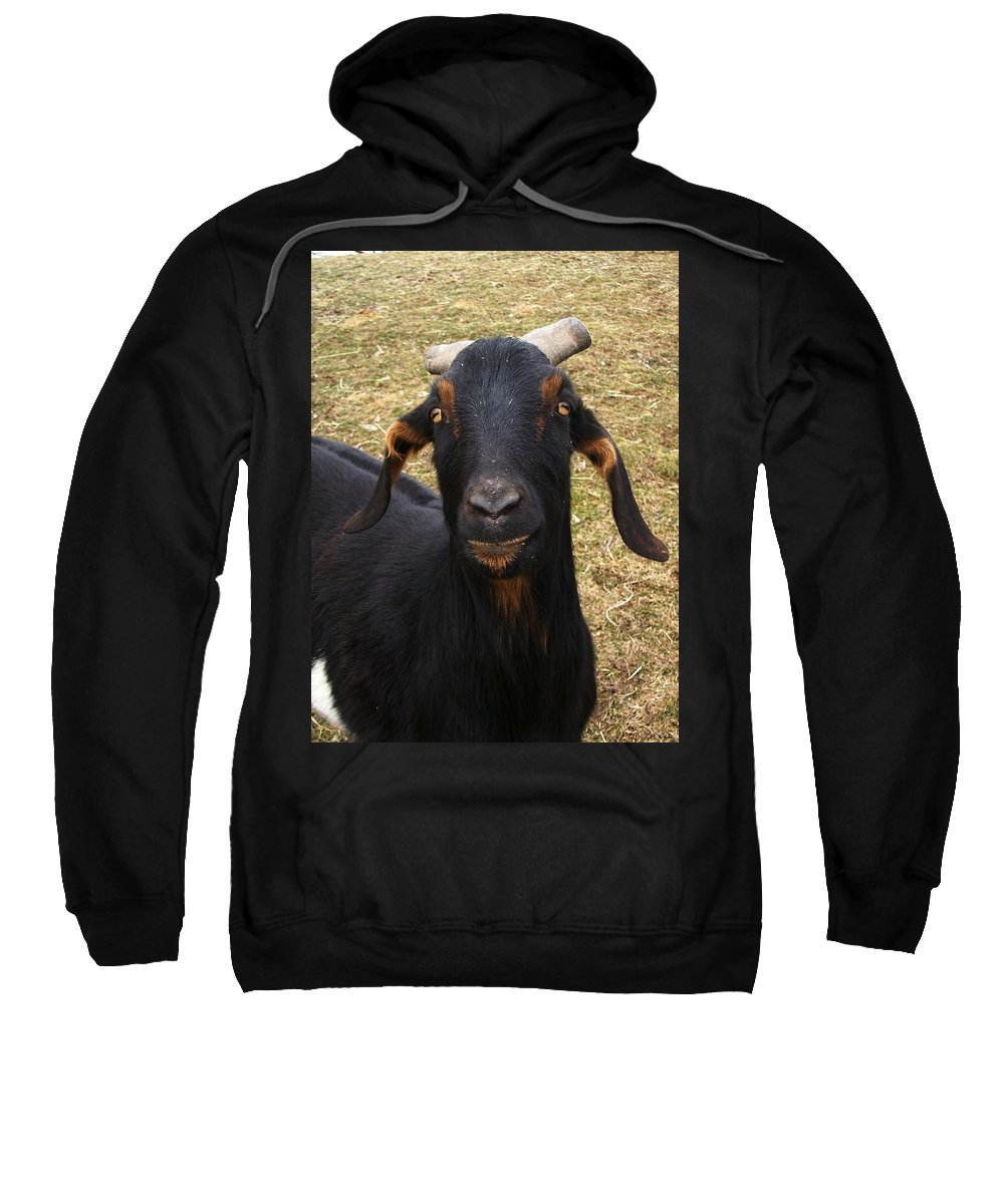 Goat Sweatshirt featuring the photograph All About Me by Sara Raber