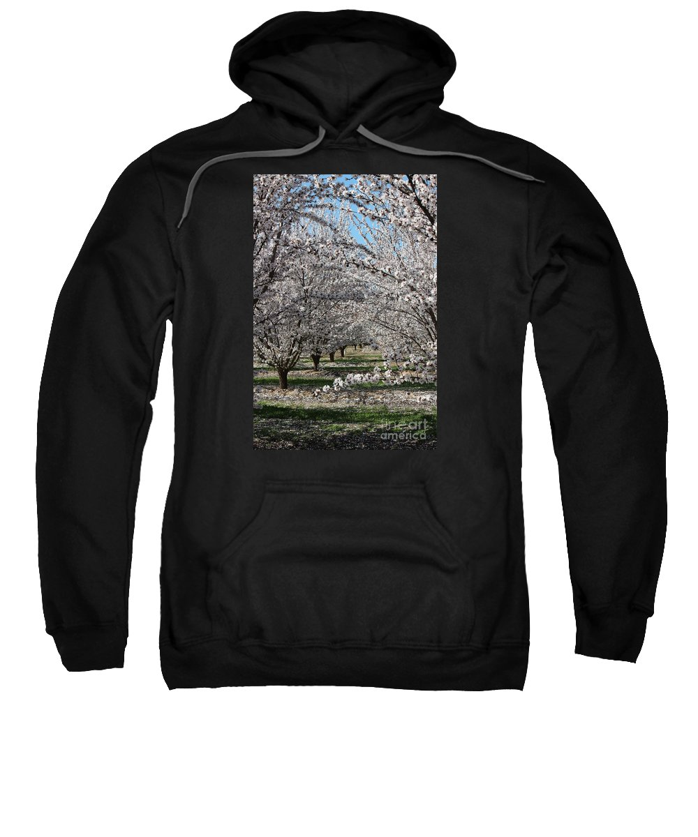 Almond Sweatshirt featuring the photograph Almond Orchard by Marta Robin Gaughen