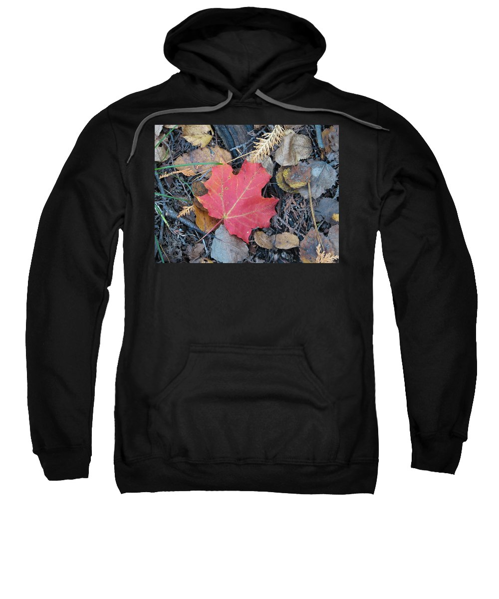 Leaves Sweatshirt featuring the photograph Alone In The Woods by Kelly Mezzapelle