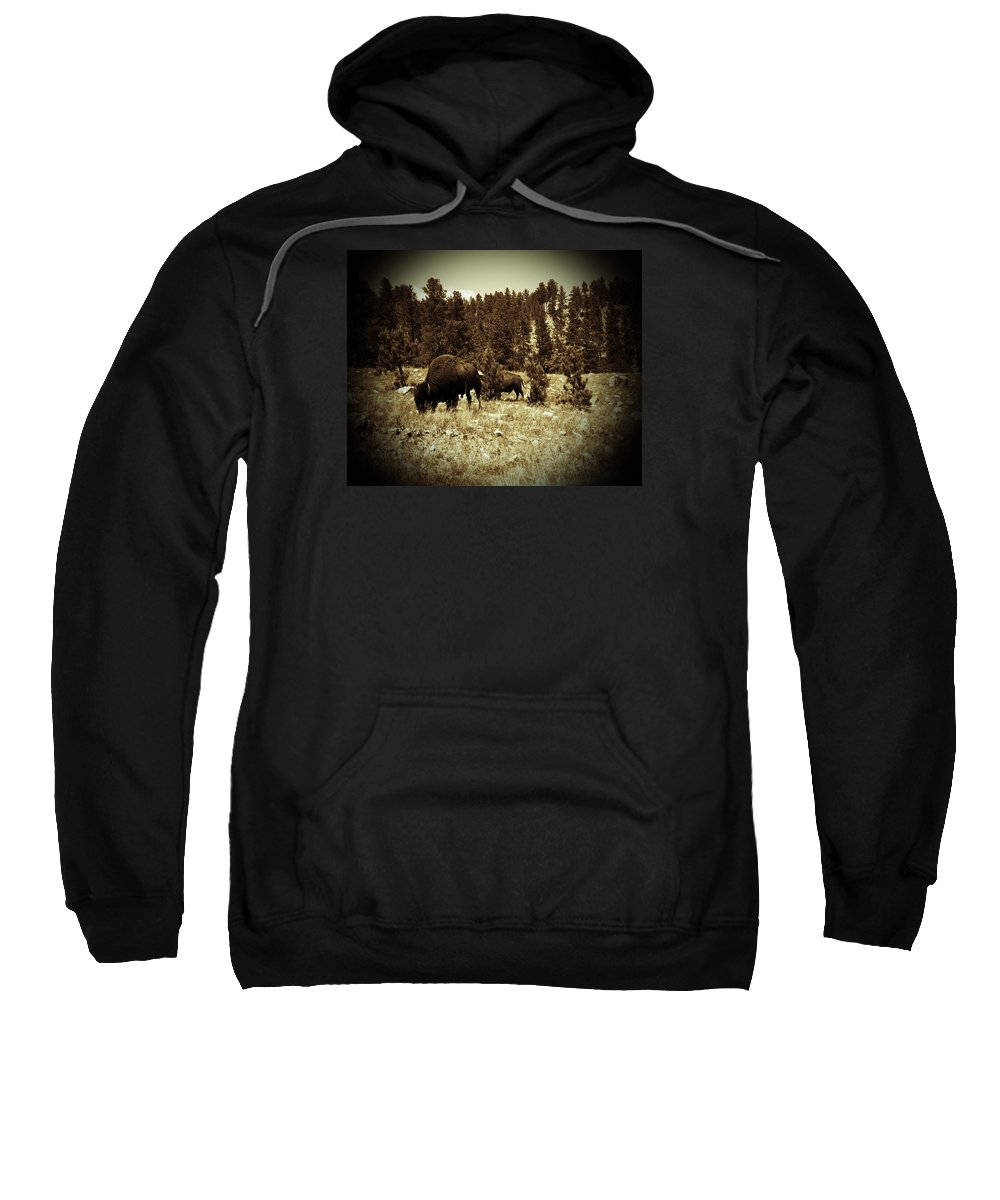 Photography Sweatshirt featuring the photograph American Bison Vintage 2 by Pamela Peters
