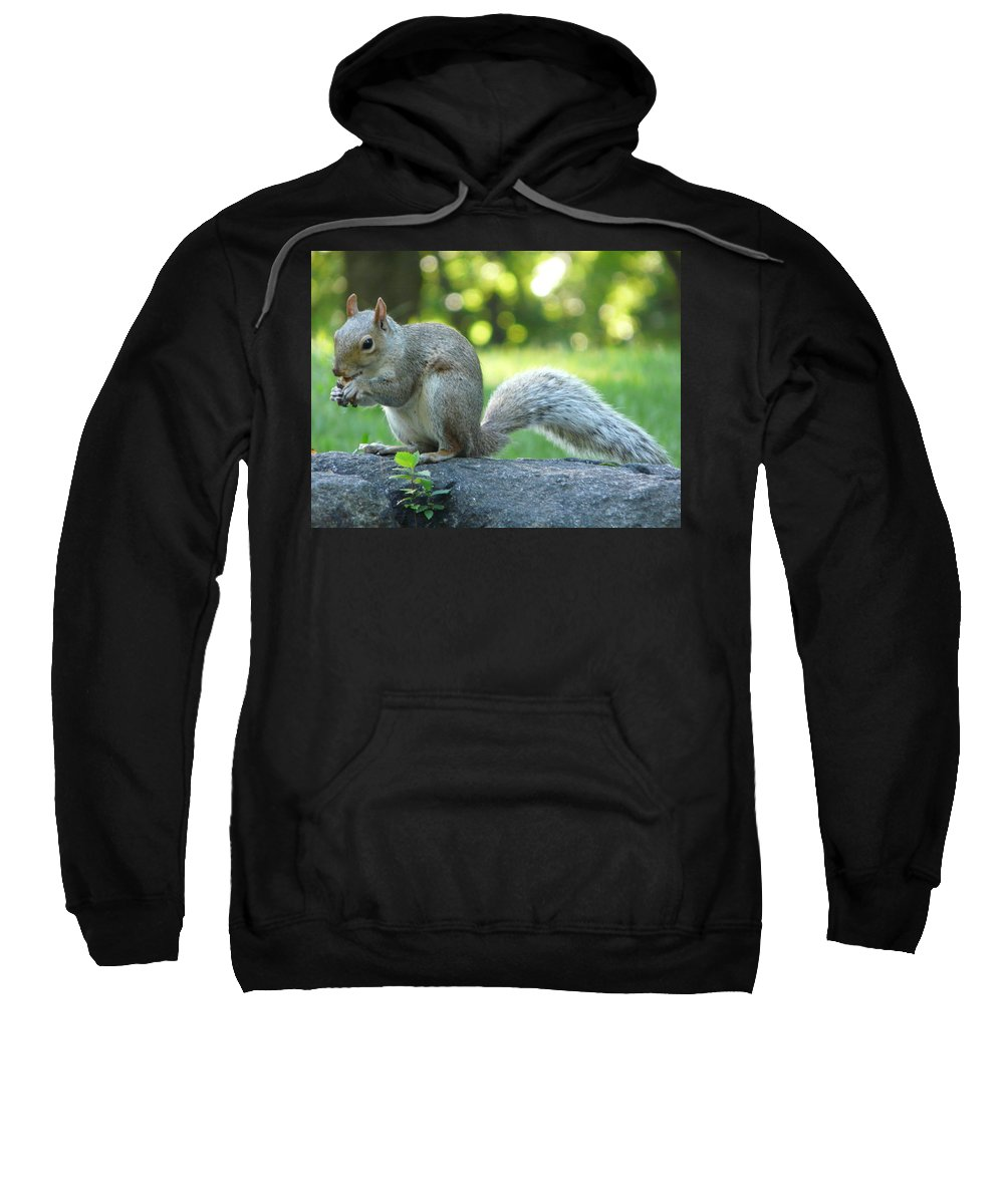 New York Sweatshirt featuring the photograph American Squirrel by Valerie Ornstein