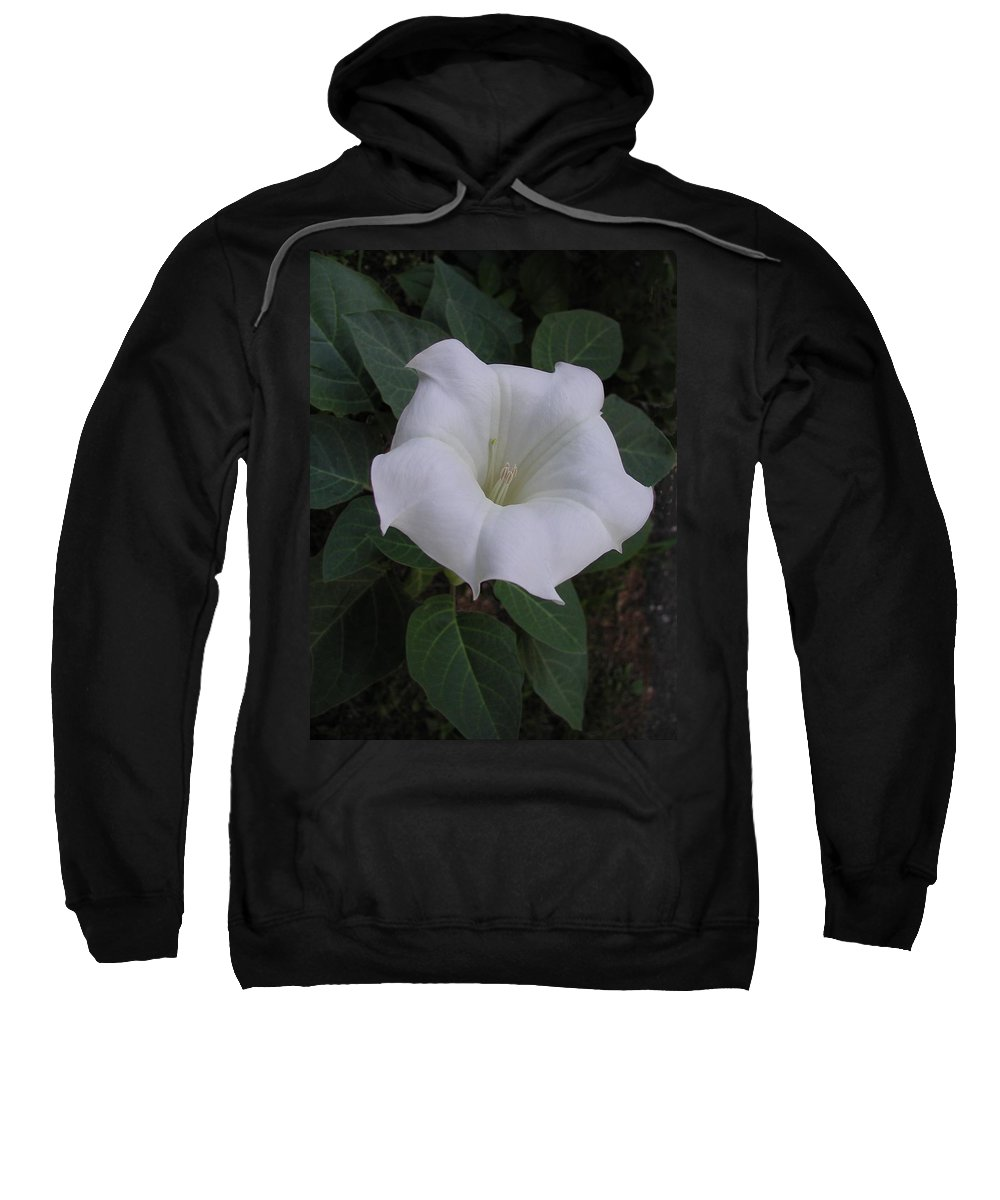 Datura Sweatshirt featuring the photograph Angel Trumpet - Color by Tom Reynen