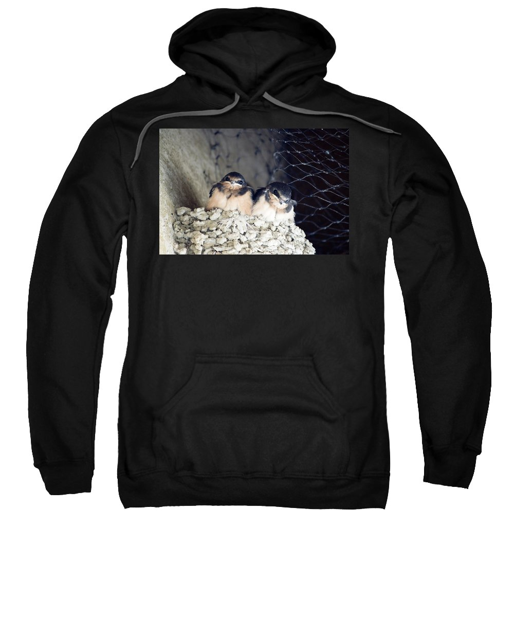 Birds Sweatshirt featuring the photograph Antelope Island Birds by Linda Dunn