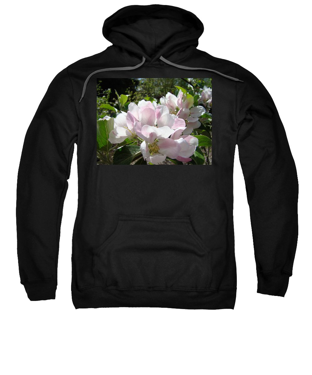 Apple Sweatshirt featuring the photograph Apple Tree Blossoms Art Prints Baslee Troutman by Baslee Troutman