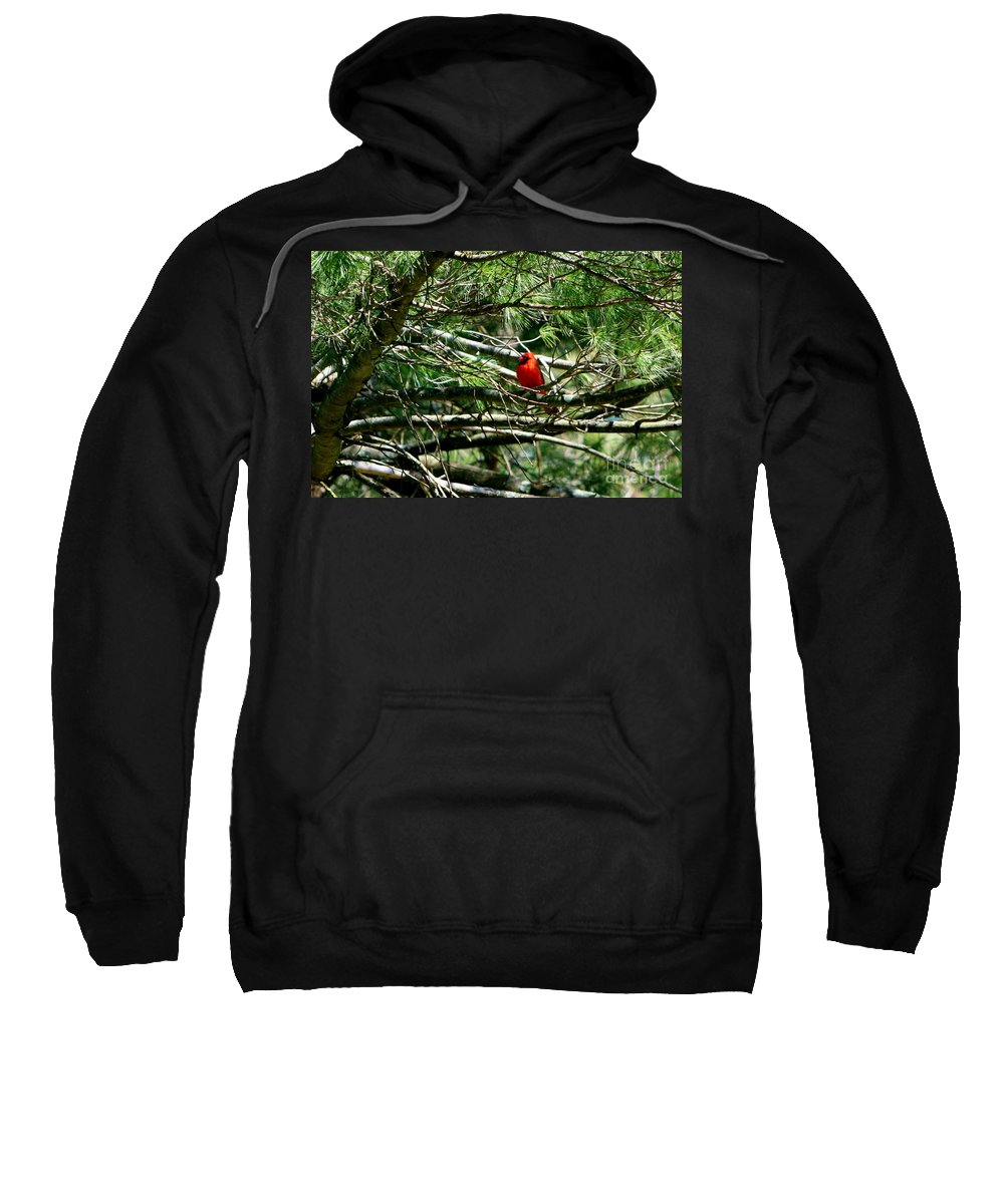 Bird Sweatshirt featuring the photograph April Cardinal by Barbara S Nickerson