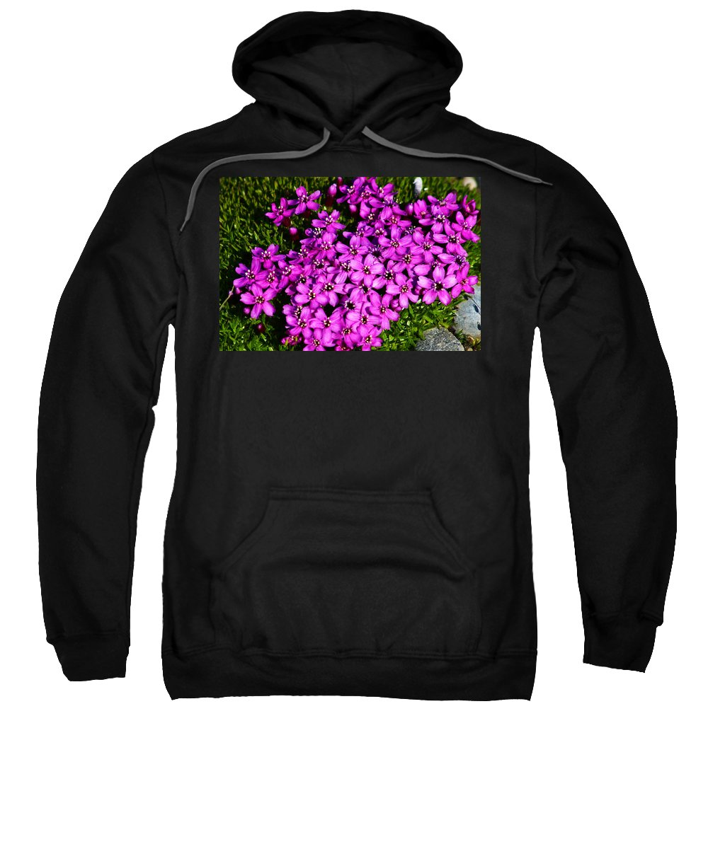 Arctic Sweatshirt featuring the photograph Arctic Wild Flowers by Anthony Jones