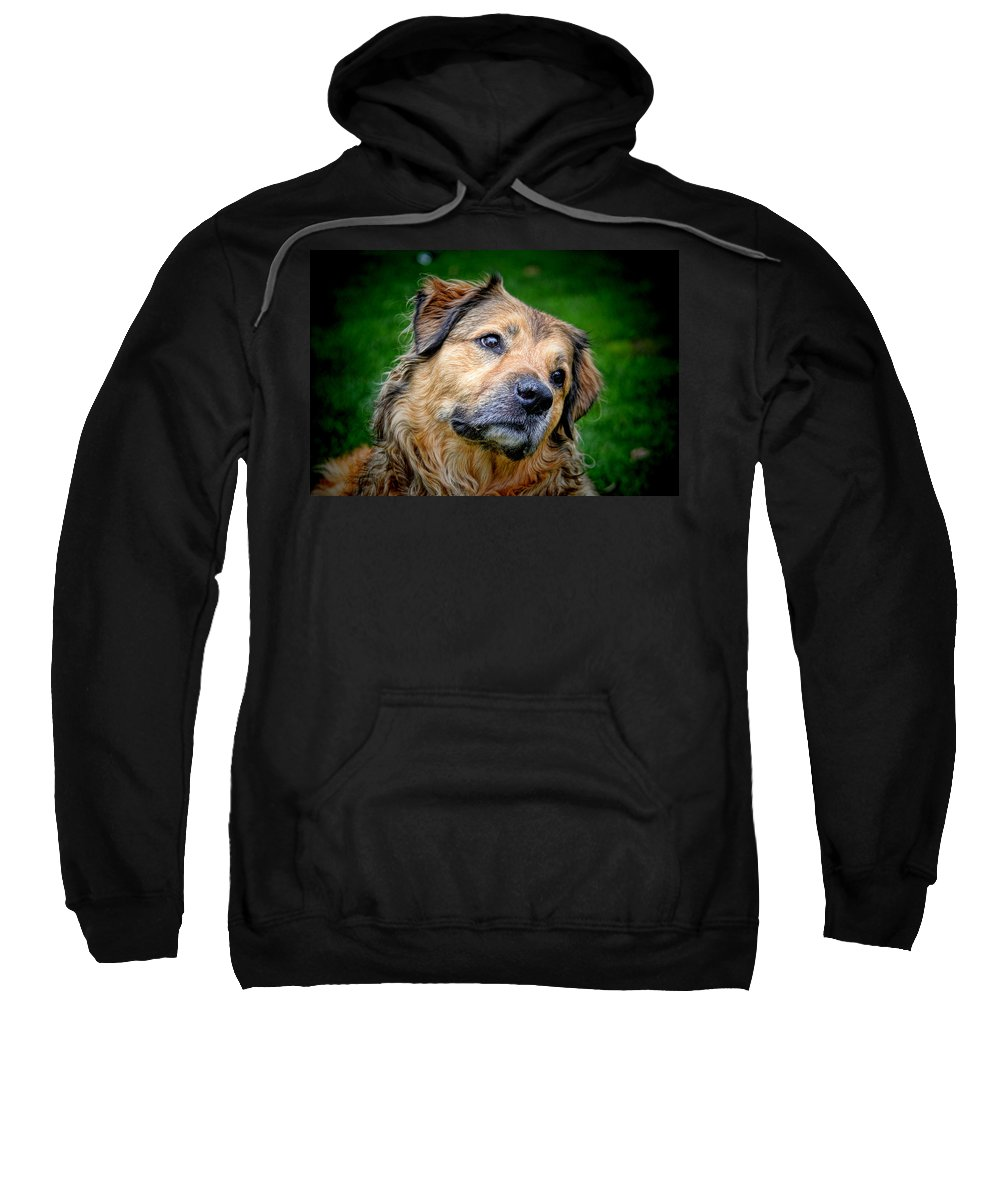 Are You Sure About That Sweatshirt featuring the photograph Are You Sure About That by Mariola Bitner