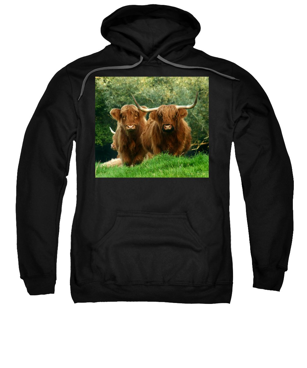 Cow Sweatshirt featuring the photograph Are You Talking To Us by Angel Ciesniarska