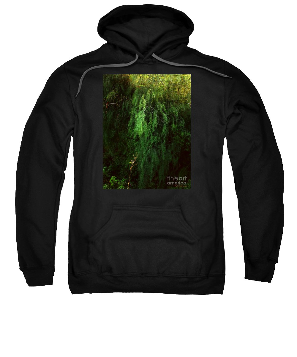 Asparagus Sweatshirt featuring the painting Asparagus Jungle by RC DeWinter