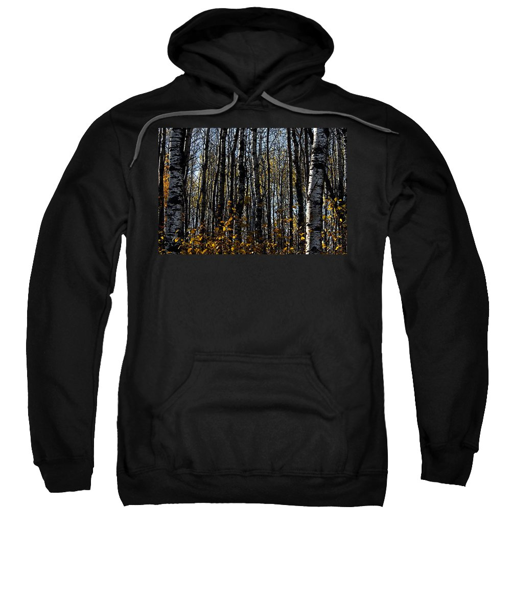 Riding Mountain National Park Sweatshirt featuring the photograph Aspen Trunks 2 by Larry Ricker