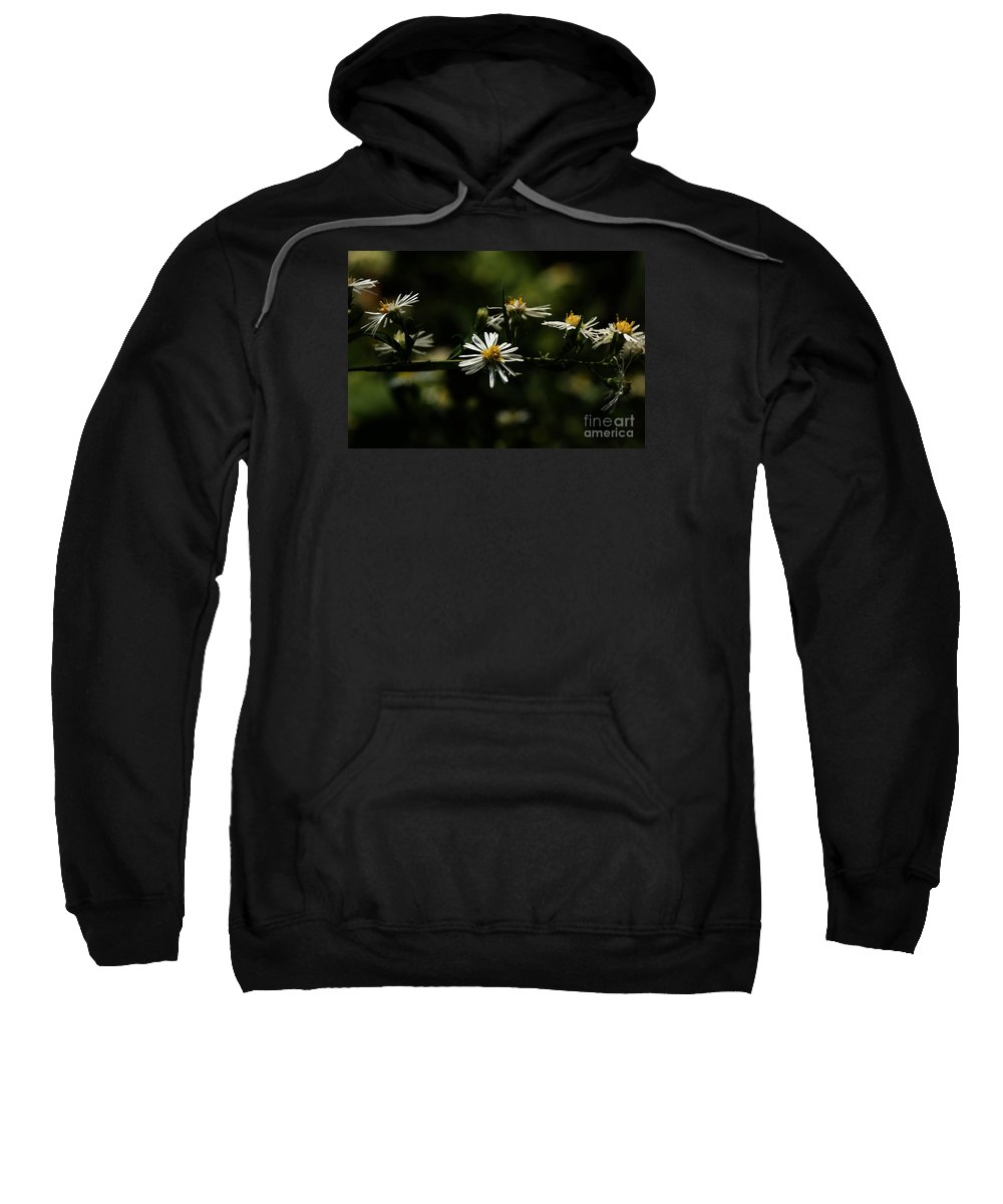 Aster Sweatshirt featuring the photograph Aster's Branch by Linda Shafer
