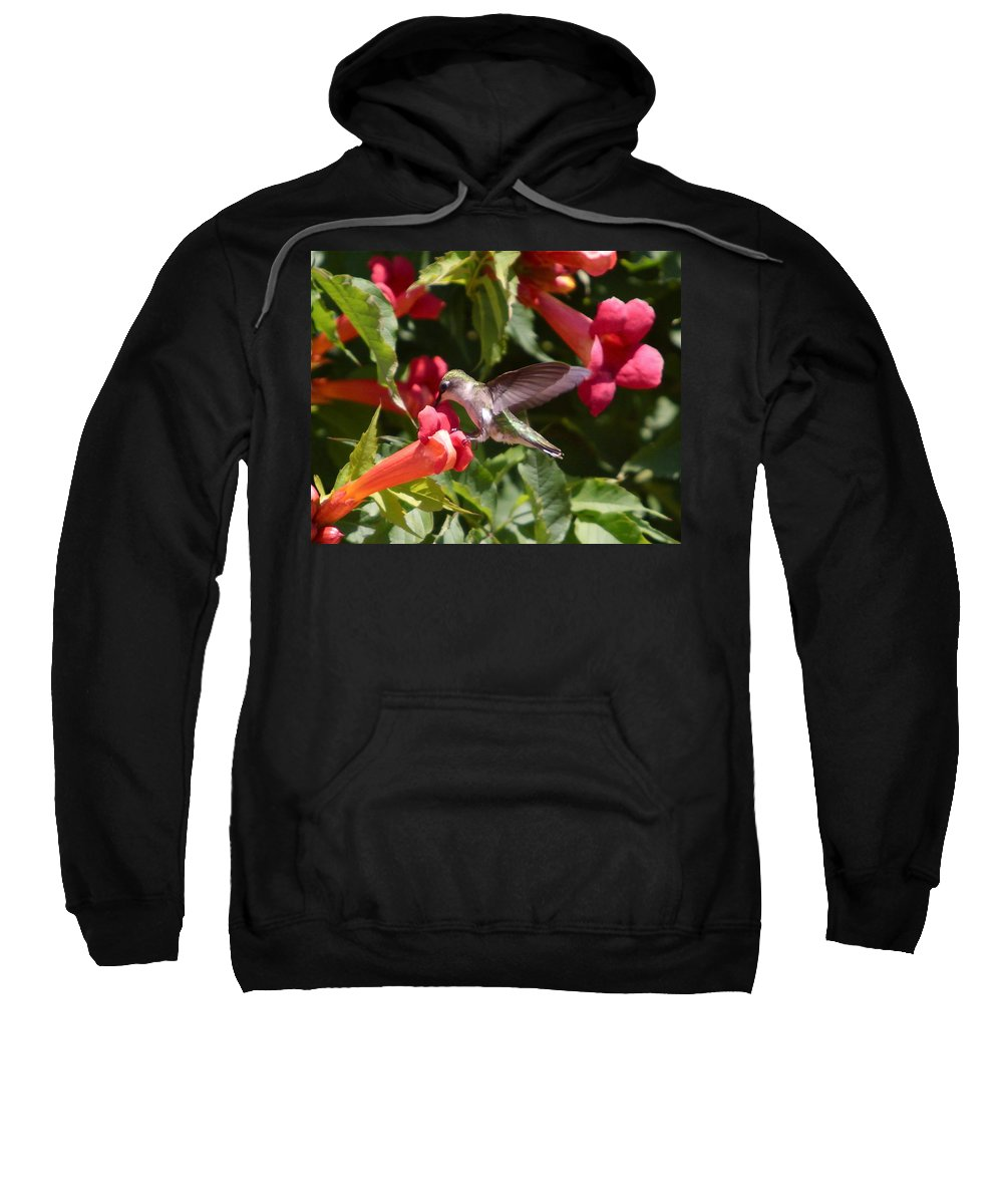 Humming Bird Sweatshirt featuring the photograph Asweet Tooth by Robert Pearson