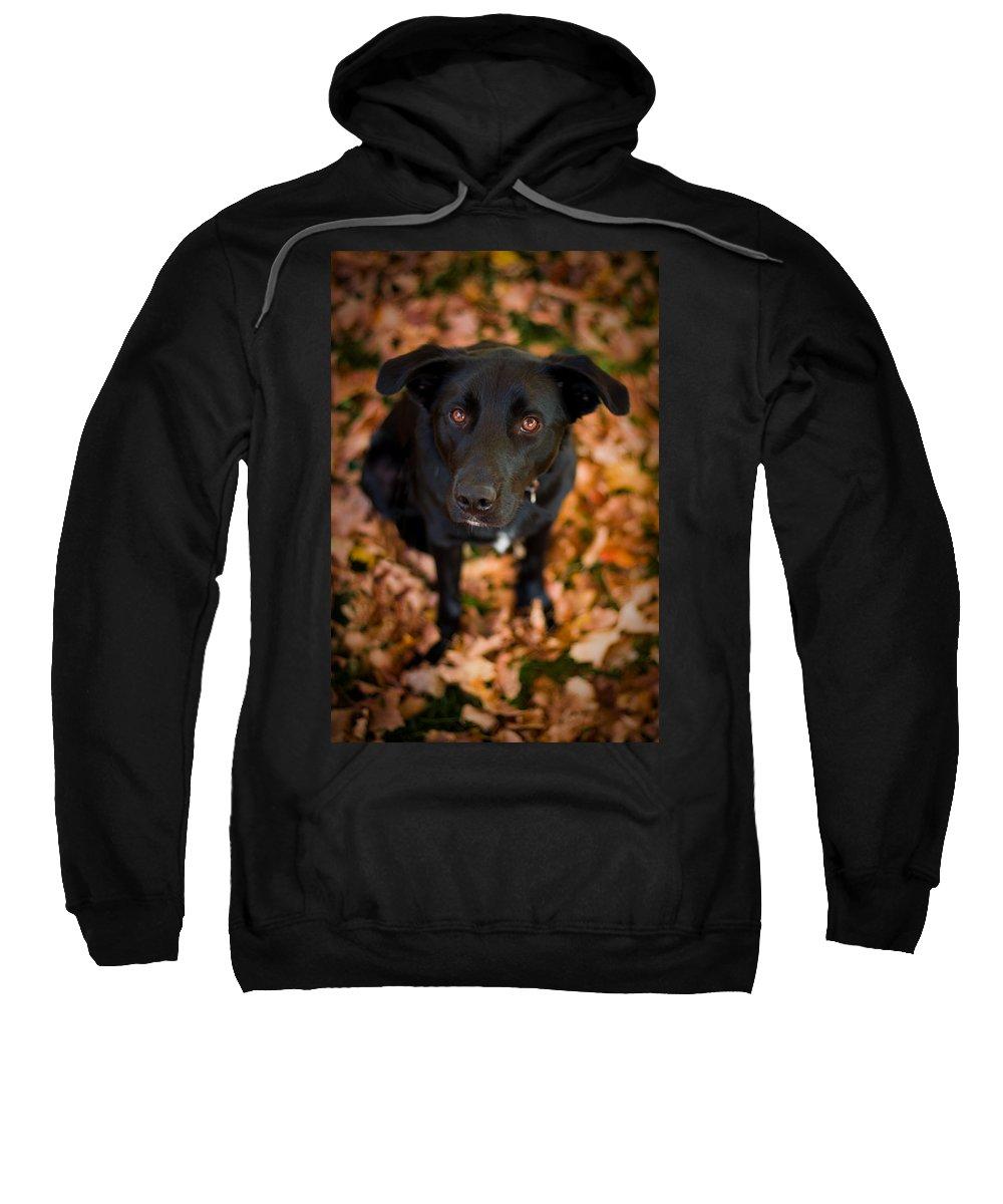 3scape Sweatshirt featuring the photograph Autumn Dog by Adam Romanowicz