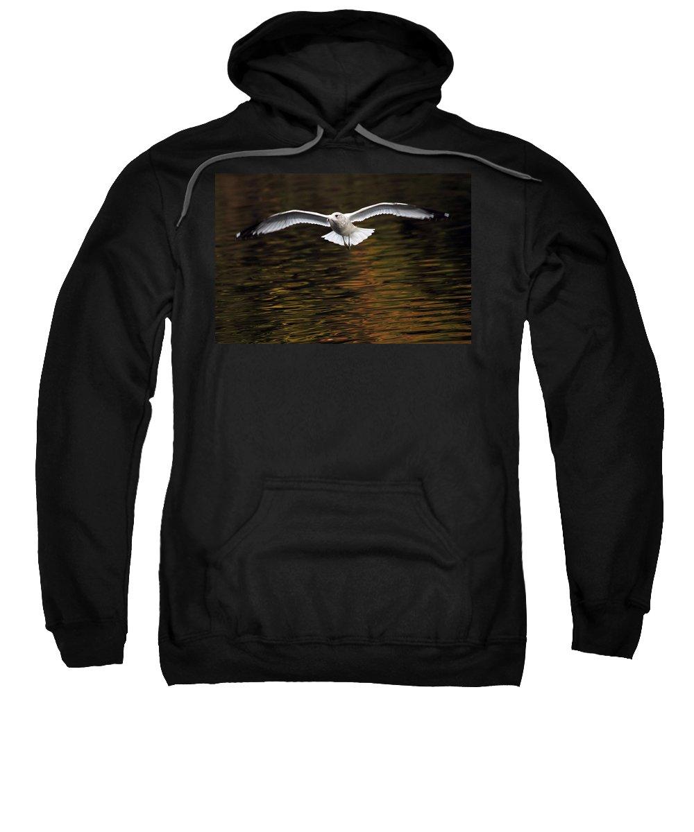 Autumn Sweatshirt featuring the photograph Autumn Flight by Karol Livote