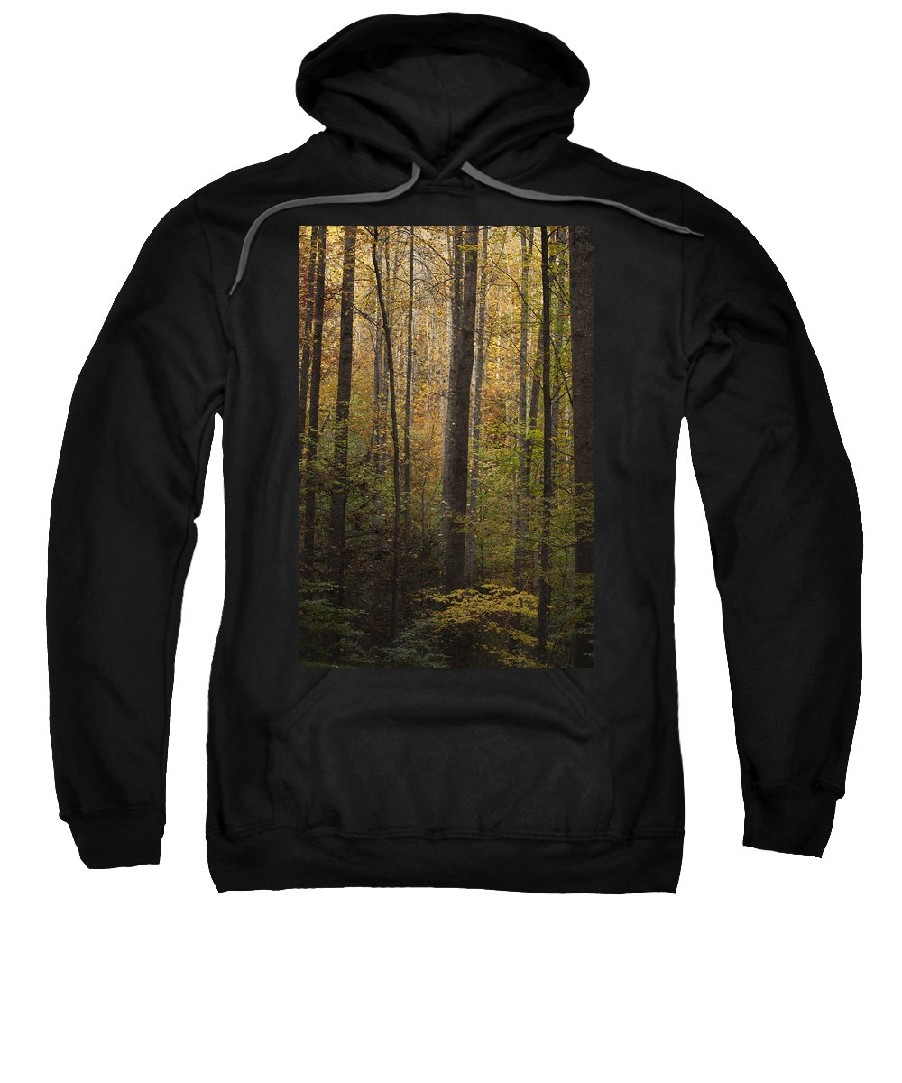 Autumn Sweatshirt featuring the photograph Autumn In The Woods by Andrew Soundarajan