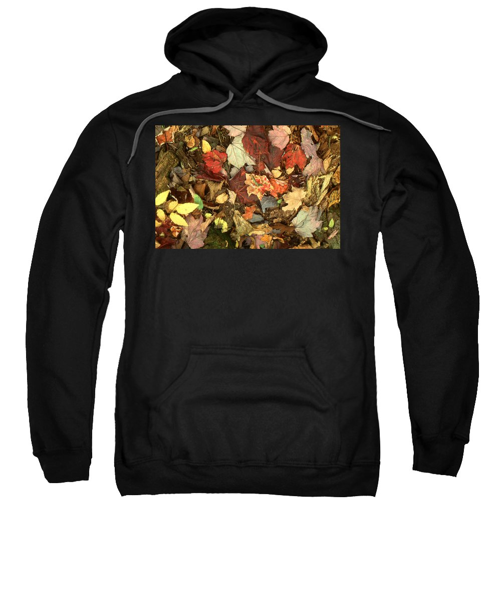 Autumn Sweatshirt featuring the photograph Colorful Autumn Leaves In Blue Green Red Yellow Orange by Peter Potter