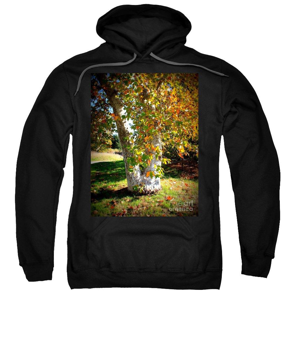 Autumn Tree Sweatshirt featuring the photograph Autumn Sycamore Tree by Carol Groenen