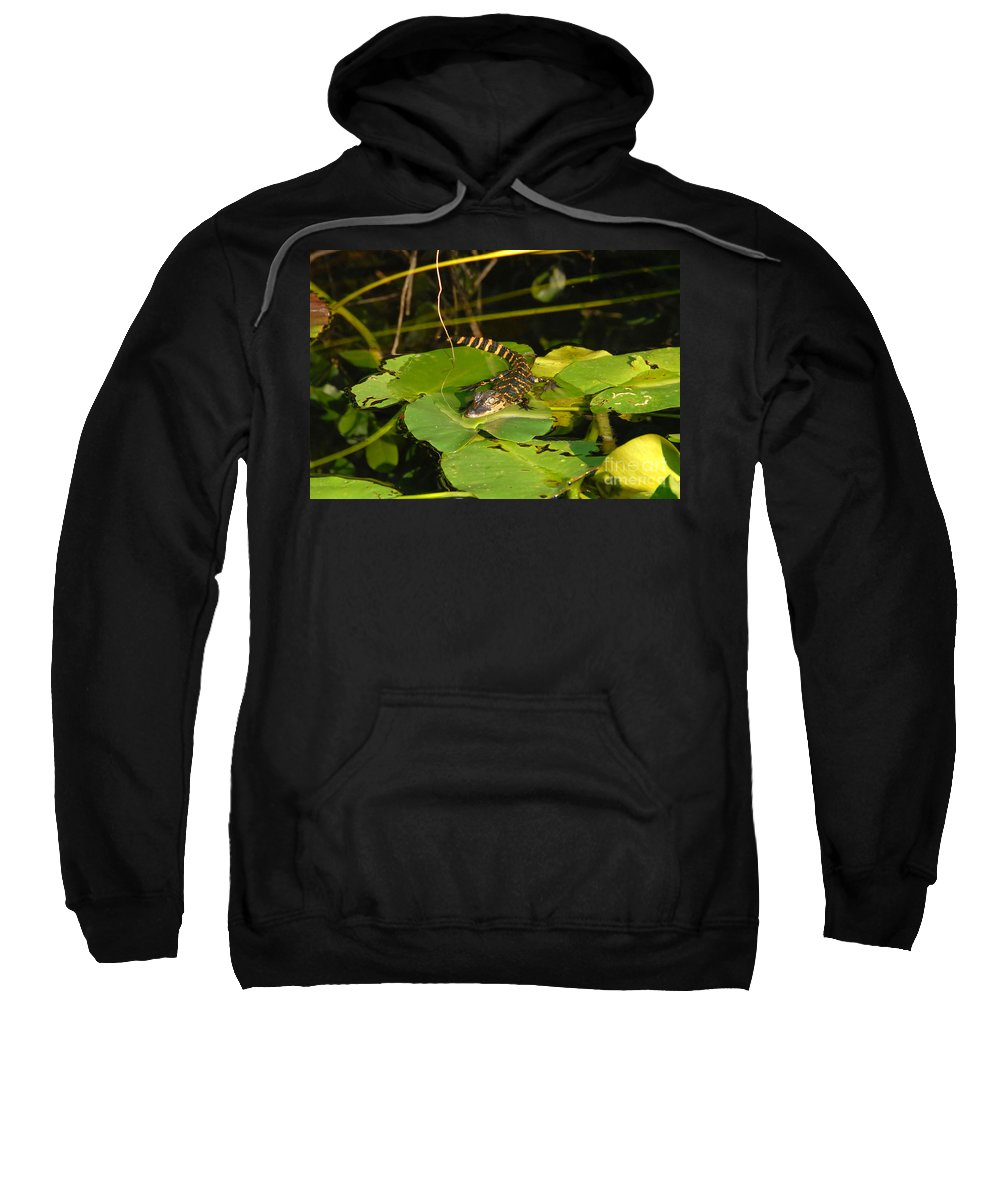 Baby Sweatshirt featuring the photograph Baby Alligator by David Lee Thompson
