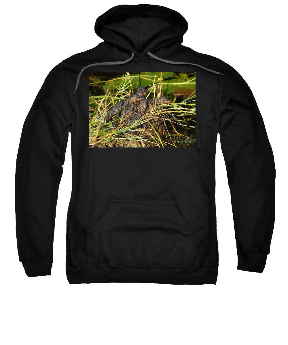 Alligators Sweatshirt featuring the photograph Baby Alligators by David Lee Thompson