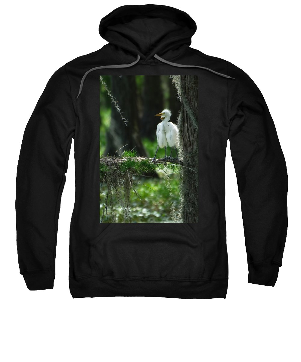 Egret Sweatshirt featuring the photograph Baby Great Egrets With Nest by Rich Leighton