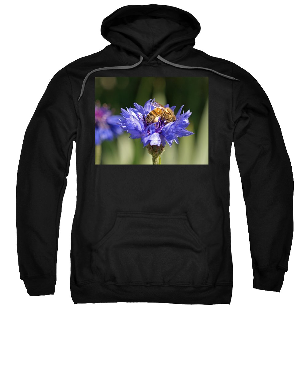 Bee. Flower Sweatshirt featuring the photograph Bachelor Button And Bee by Heather Coen
