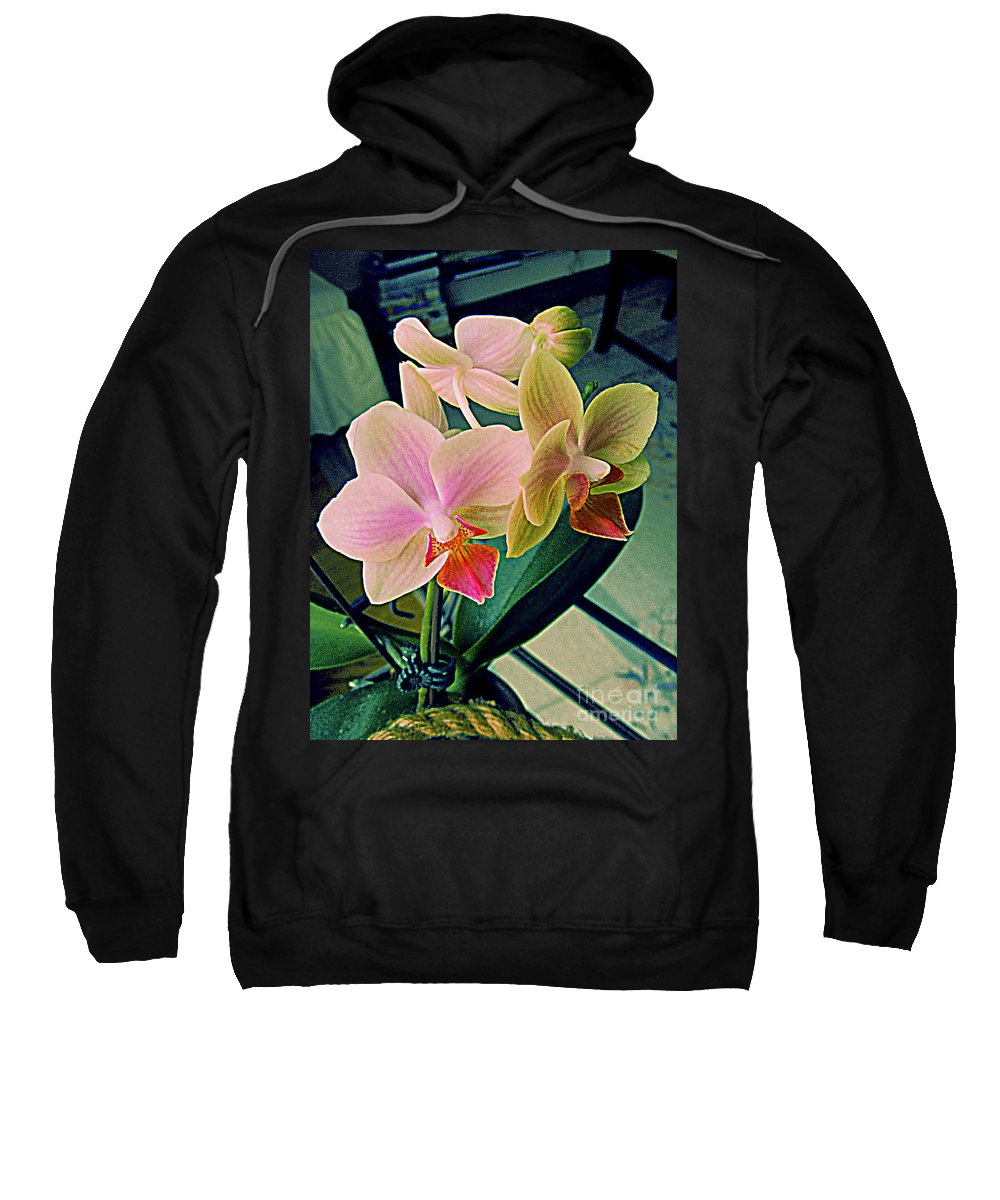Photography Sweatshirt featuring the photograph Back For A Second Year by Nancy Kane Chapman
