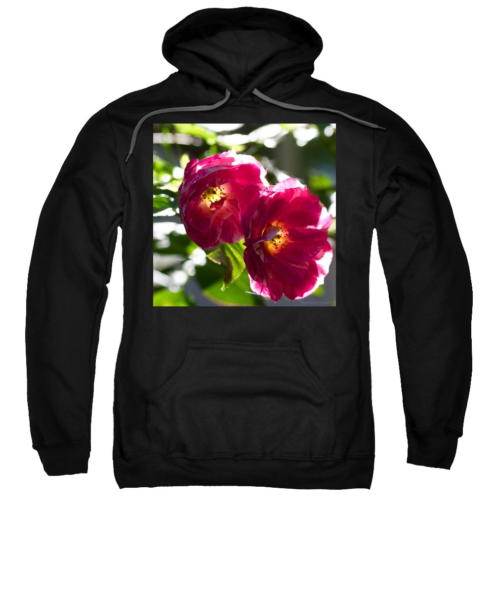 Backlit Roses Sweatshirt featuring the photograph Backlit Roses by Anna Porter