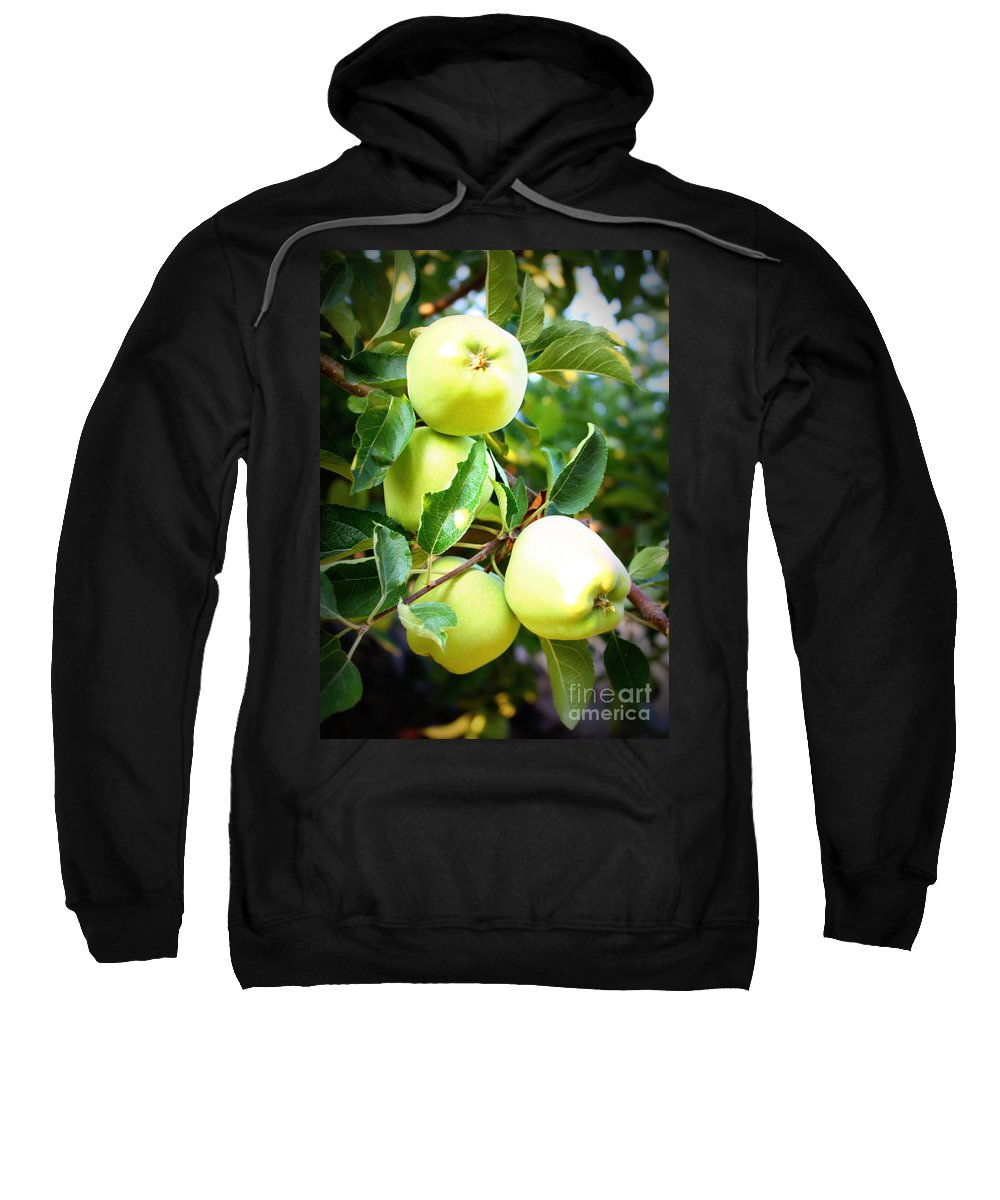 Food Sweatshirt featuring the photograph Backyard Garden Series- Golden Delicious Apples by Carol Groenen