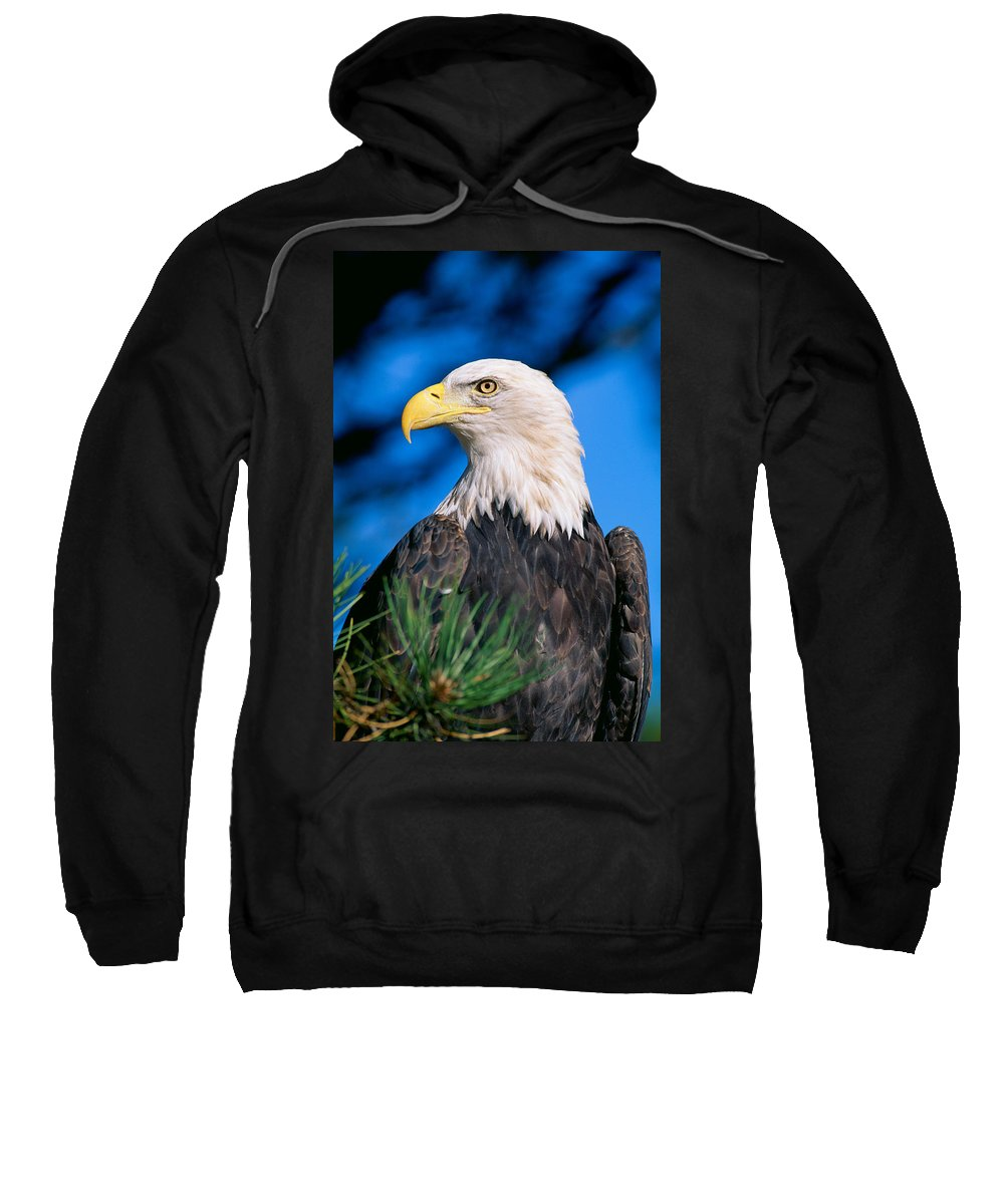Afternoon Sweatshirt featuring the photograph Bald Eagle by John Hyde - Printscapes