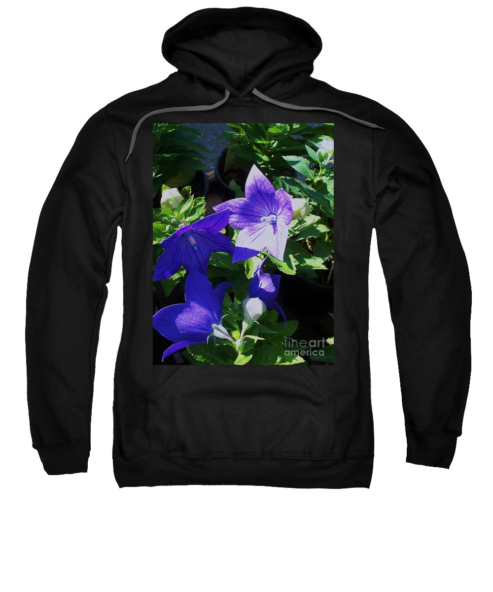 Landscapes Sweatshirt featuring the photograph Baloon Flower by Eric Schiabor