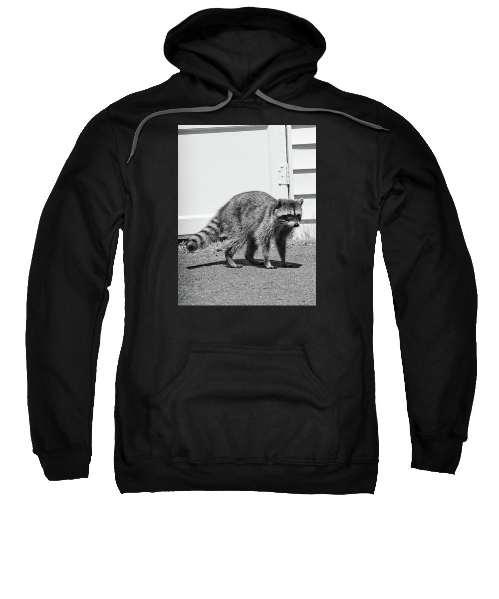 Adria Trail Sweatshirt featuring the photograph Bandit In Broad Daylight by Adria Trail