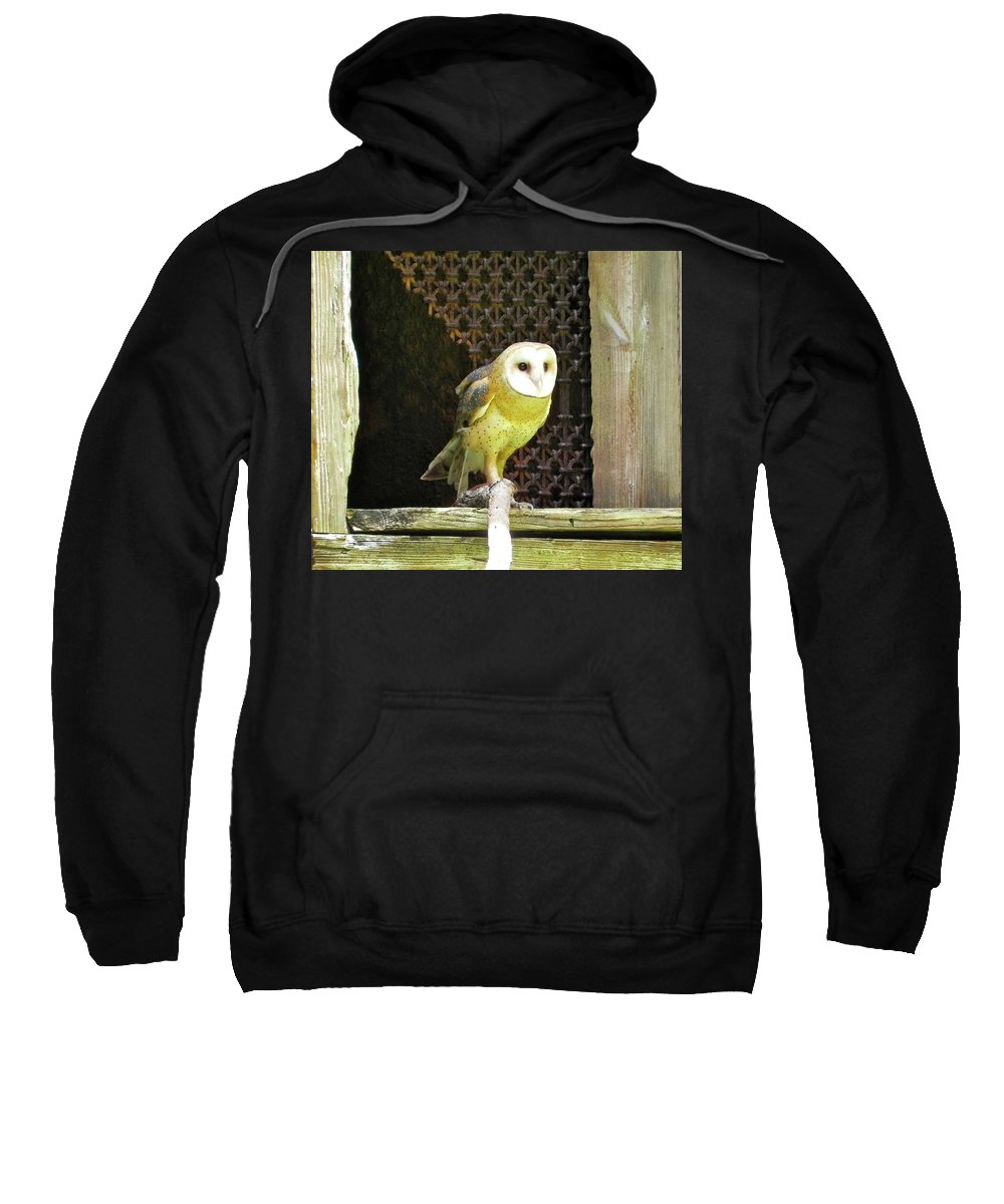 Bird Sweatshirt featuring the photograph Barn Owl On The Prowl by Maureen Beaudet